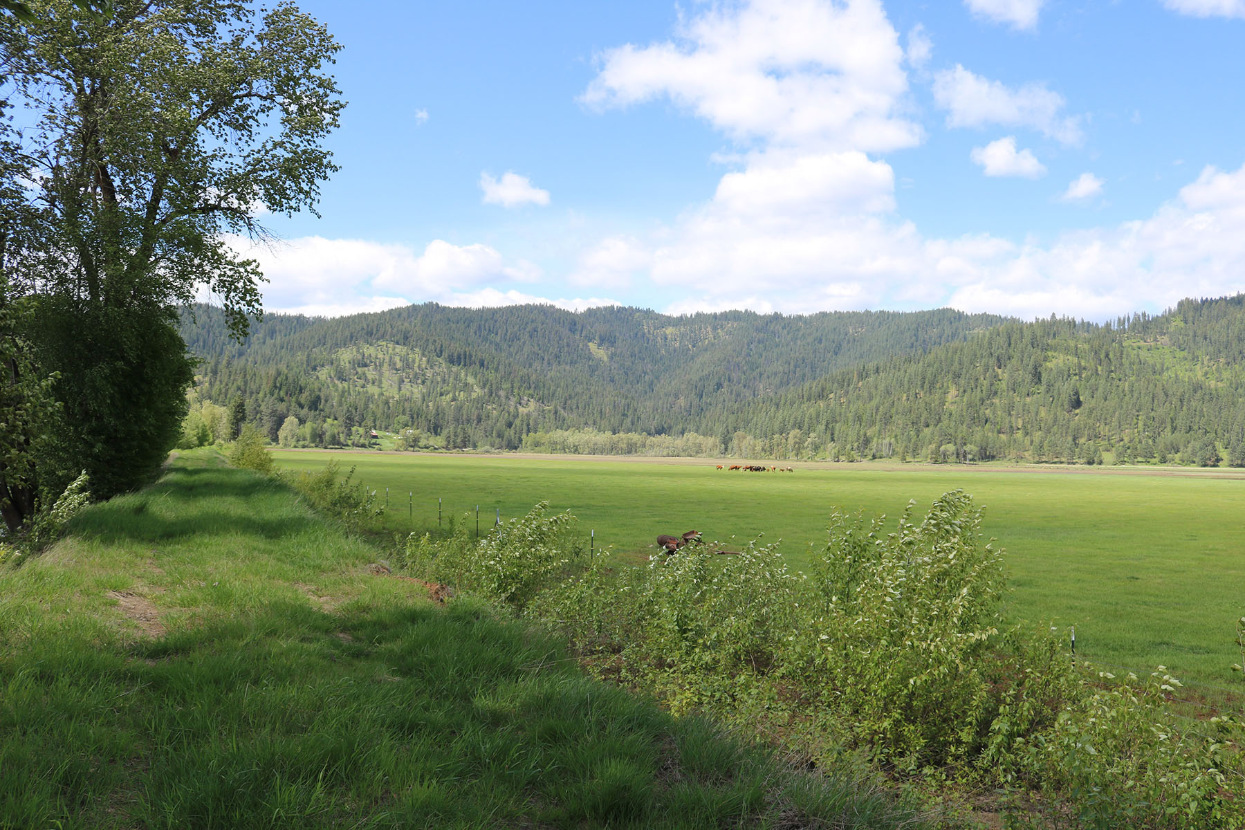 Additional photo for property listing at 3.29 acres with 700' or so frontage on the Coeur d'Alene River NNA Coeur d'Alene River Harrison, Idaho 83810 United States