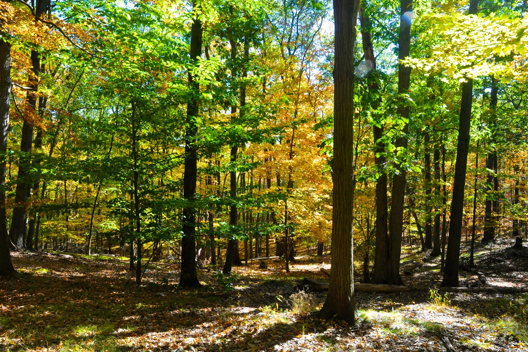 Land for Active at Beautiful 4.5 acre Building Lot Lookout Stable Road Tuxedo Park, New York 10987 United States