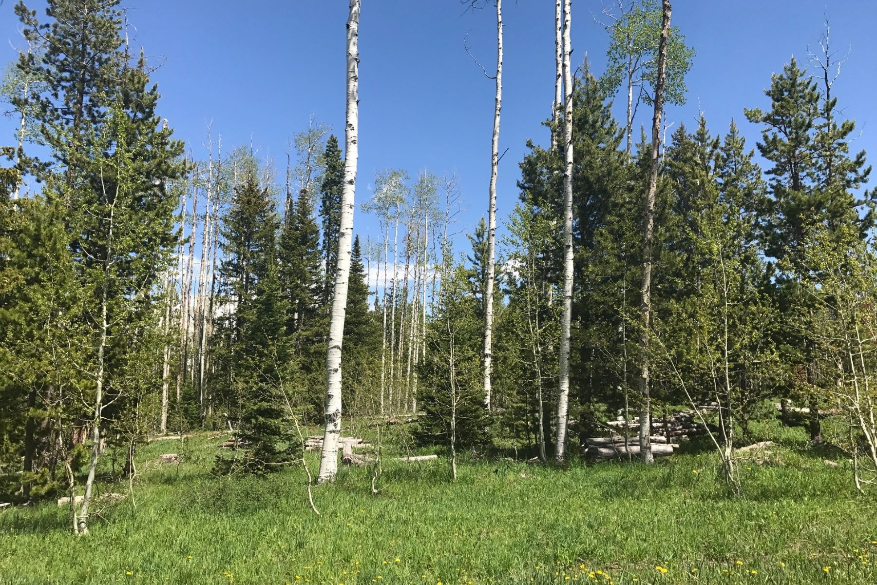 Land for Sale at Scenic Lot Near Steamboat Lake 59155 Wiley Way Clark, Colorado 80428 United States