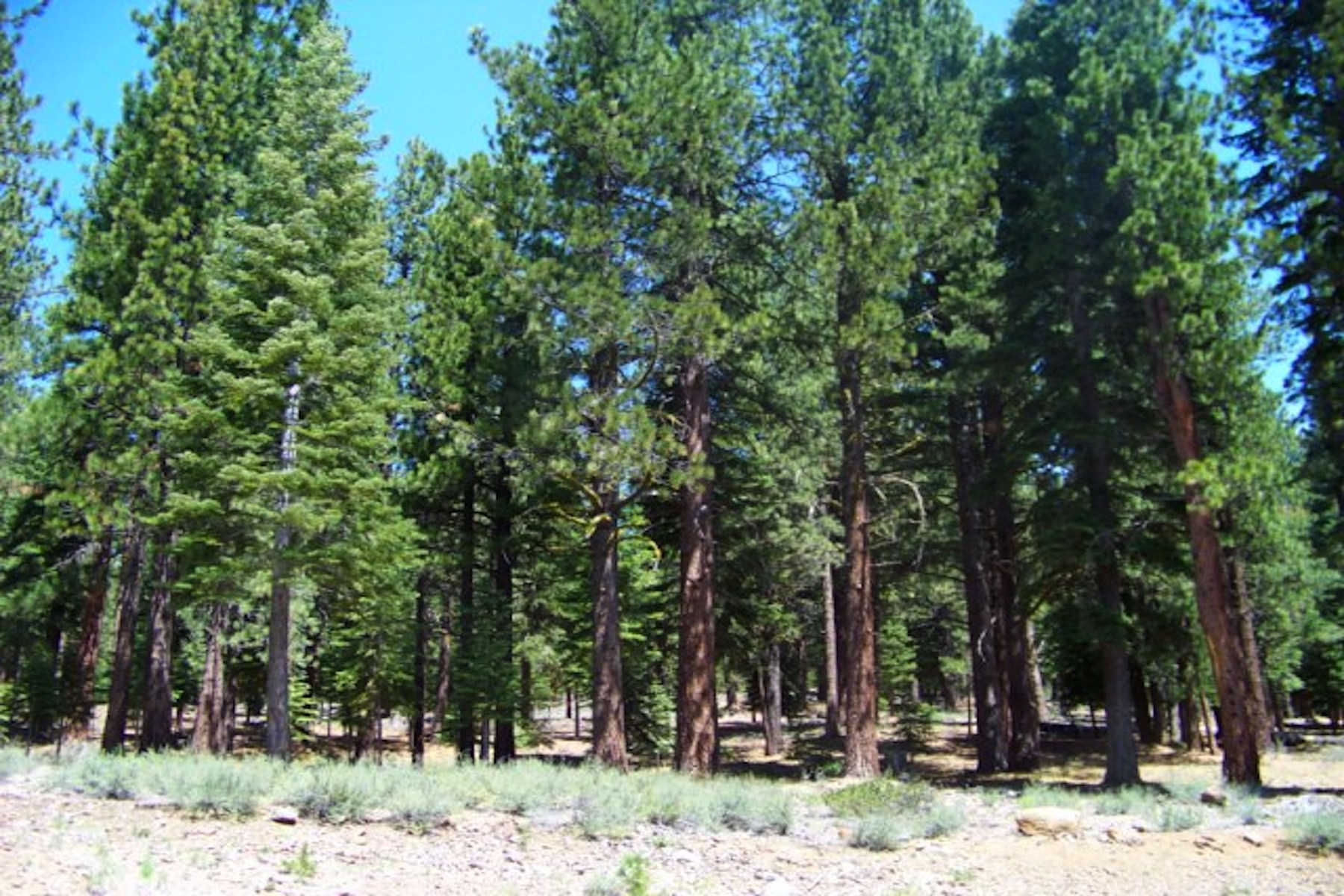 Land for Active at 12636 Granite Drive, Truckee CA 96161 12636 Granite Drive Truckee, California 96161 United States