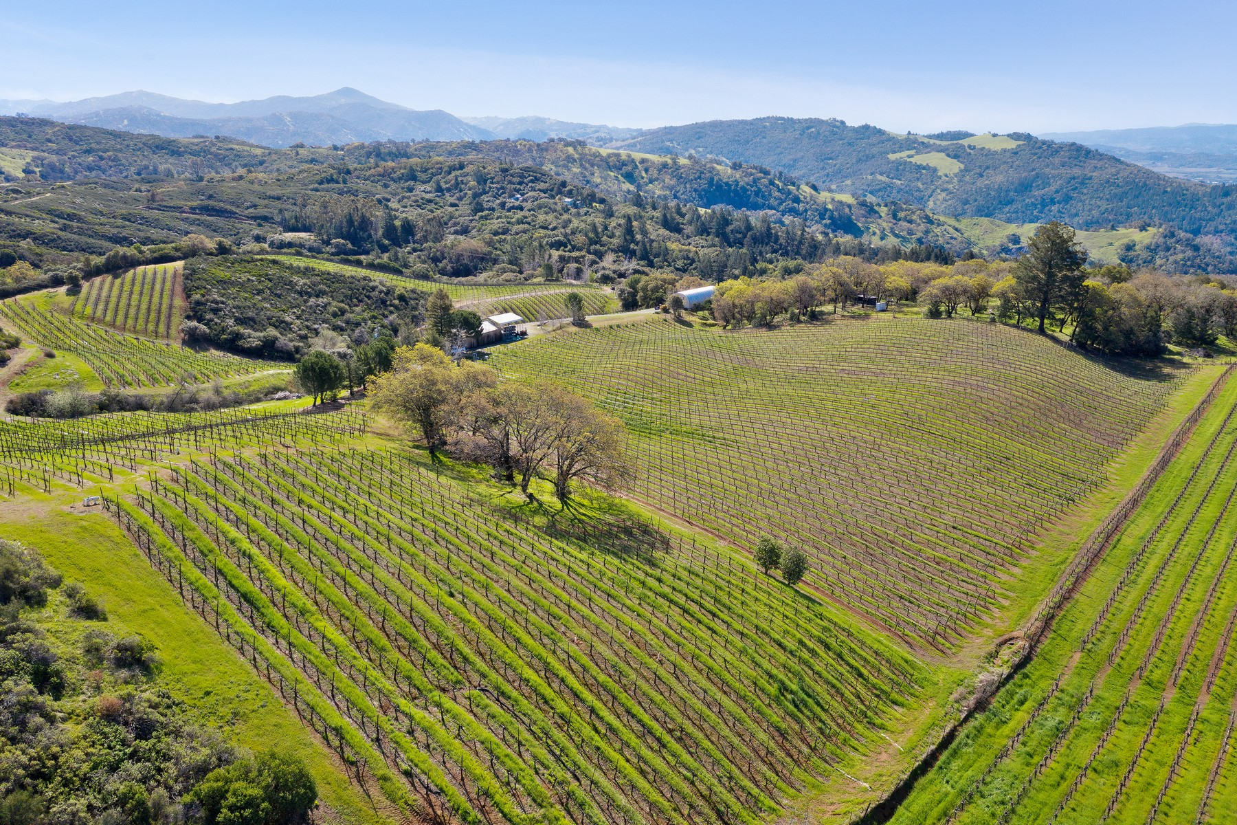 Vineyard Real Estate for Sale at Pine Mountain Majesty Cloverdale, California 95425 United States