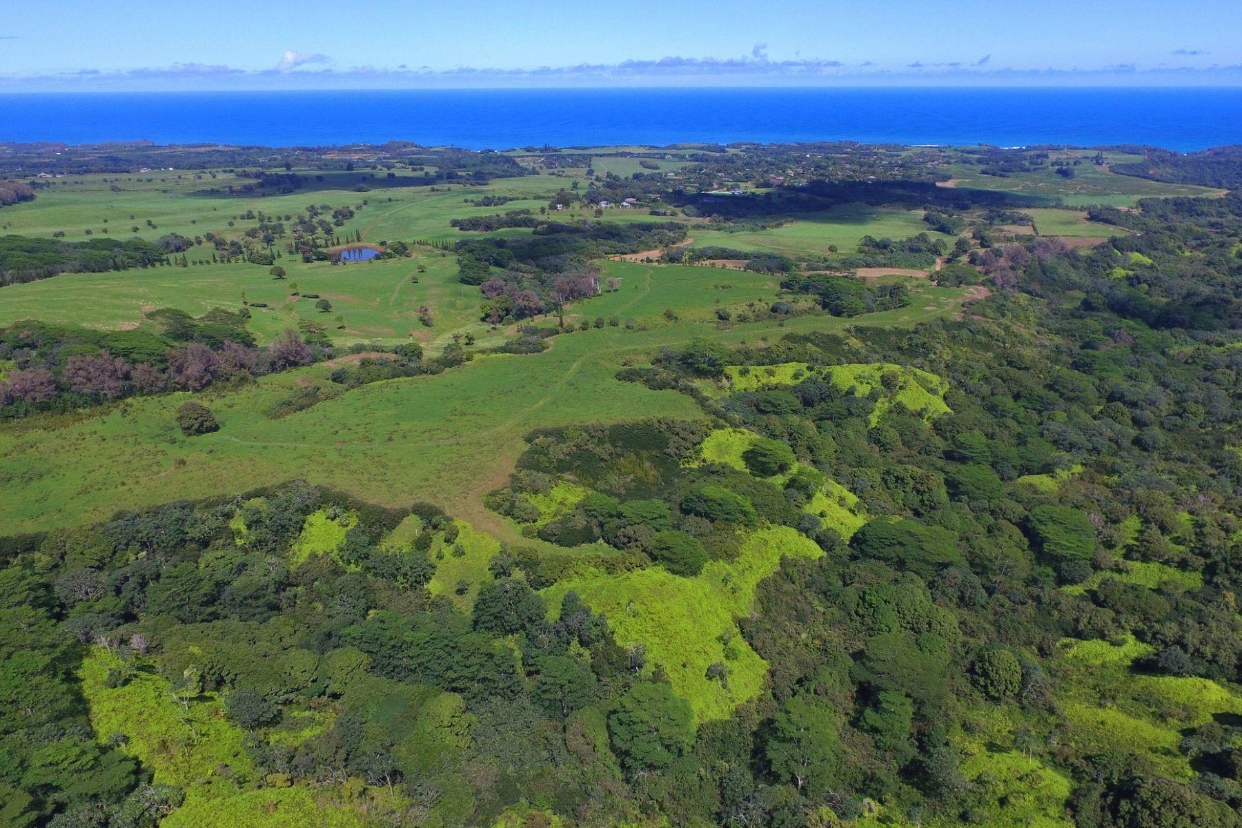 土地 のために 売買 アット Waterfall and Views 0000 Kilauea, ハワイ 96754 アメリカ合衆国