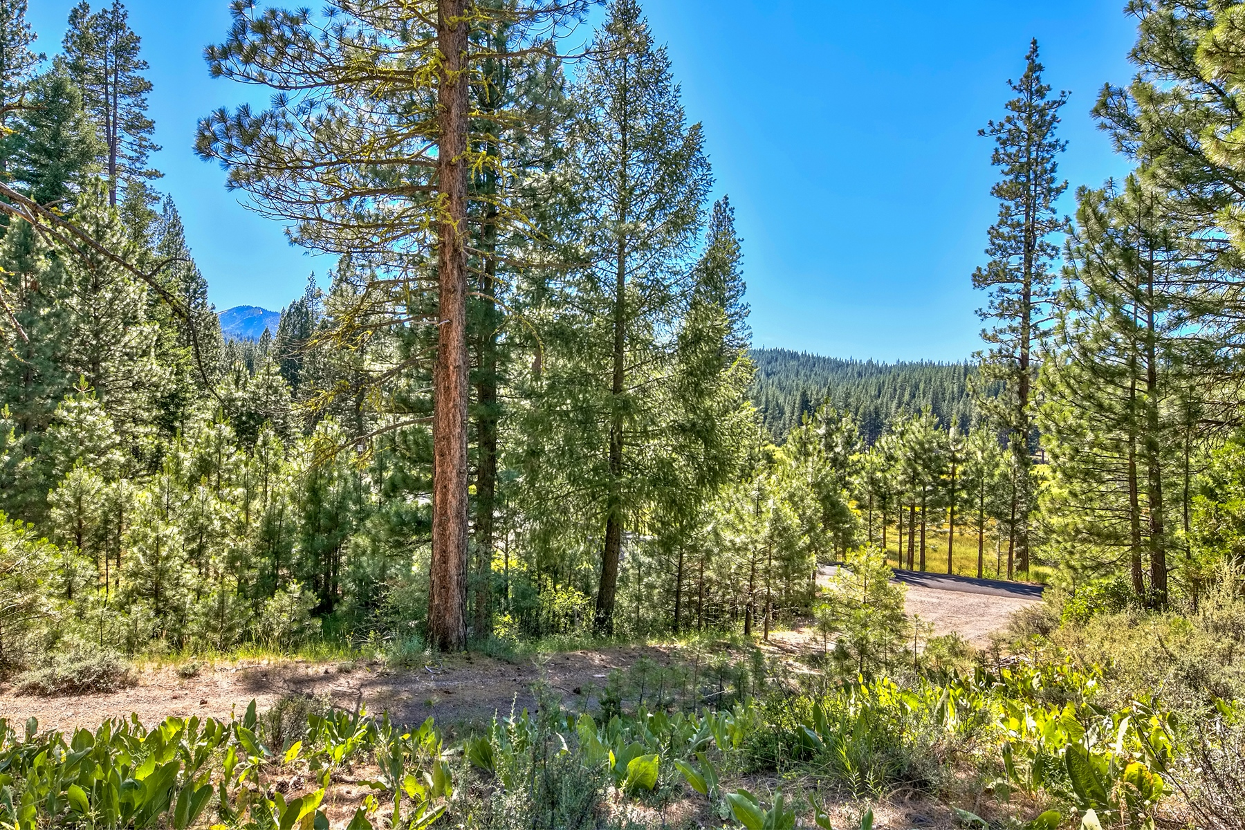 Land for Active at 483 Smith Creek Road, Graeagle, CA 96103 483 Smith Creek Road Graeagle, California 96103 United States