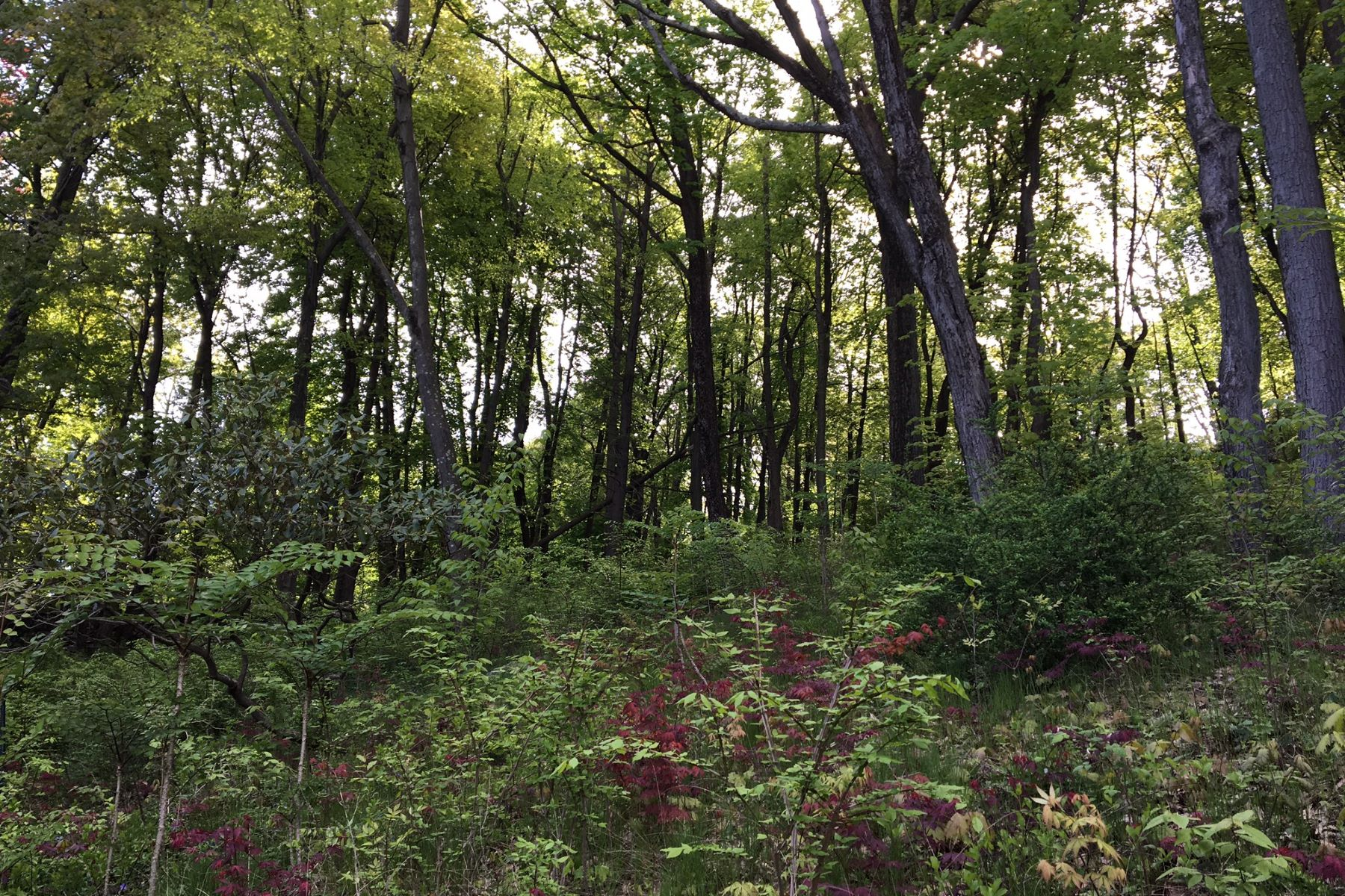 Land for Sale at Mountain Wood Pine Hill Road Tuxedo Park, New York 10987 United States