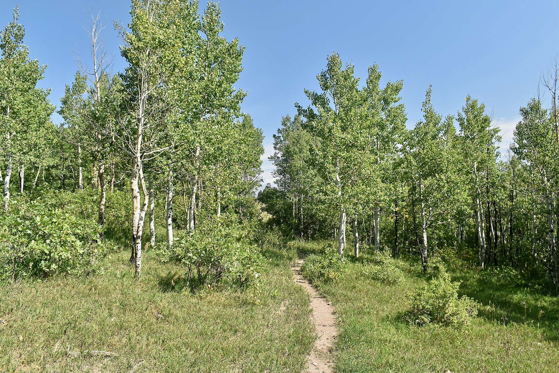 Additional photo for property listing at Montagna I TBD N US Hwy 550 Montagna I Durango, Colorado 81301 United States