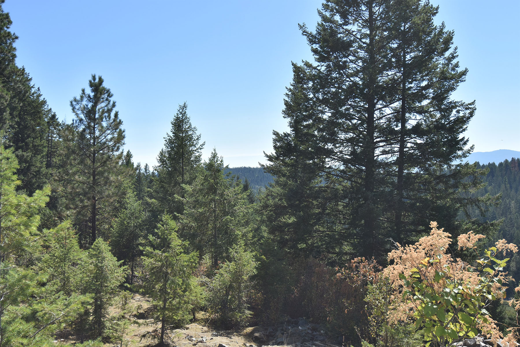 Additional photo for property listing at The Idaho Club Blk 5 Lot 5 Blk 5 Lot 5 S Idaho Club Dr Sandpoint, Idaho 83864 United States