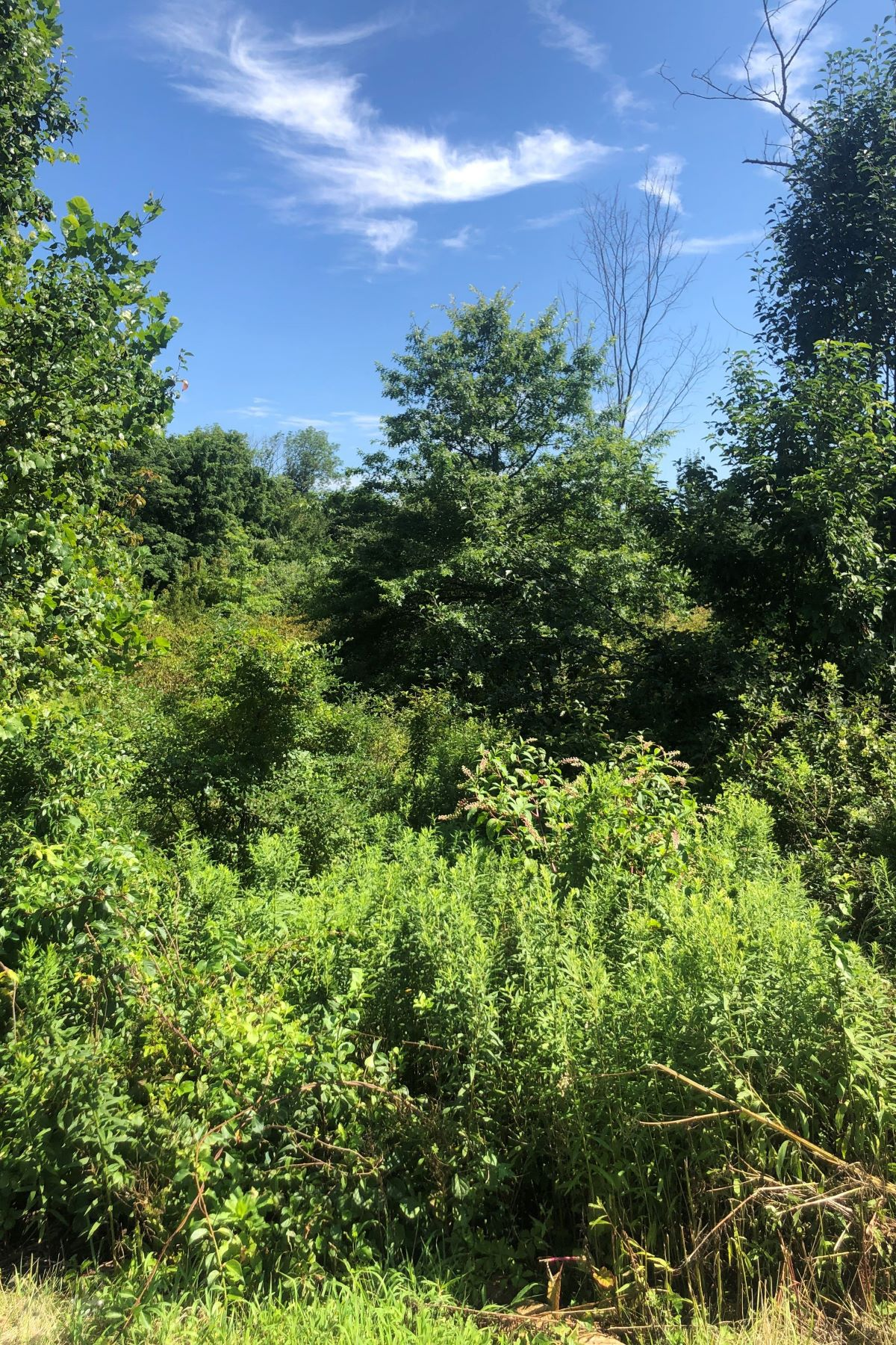 Land for Sale at Wonderful Lot 0 Route 173 Union Township, New Jersey 08802 United States