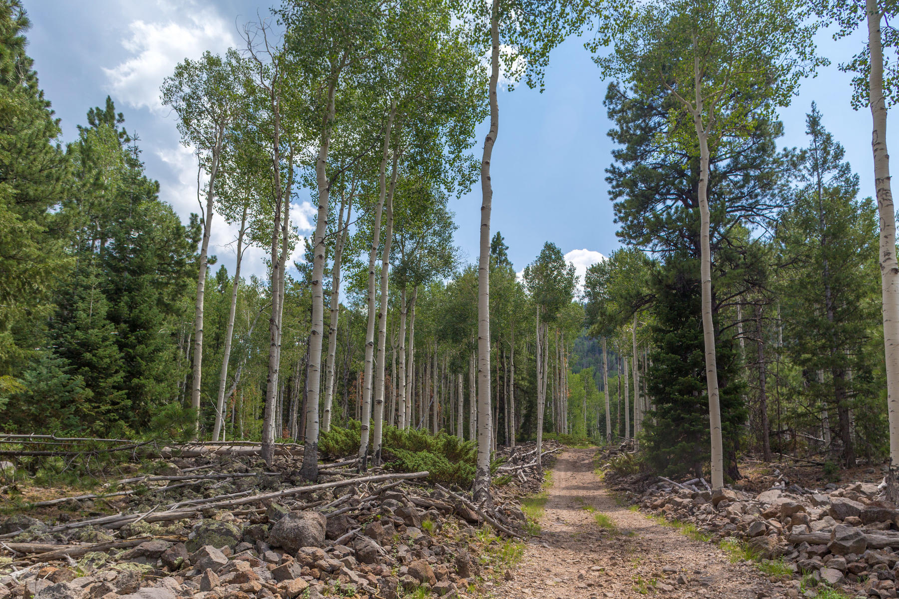 Land for Sale at Quaking Aspens Wooded Retreat Lot 11 Tax ID #01-0032-0011, Beaver, Utah 84713 United States
