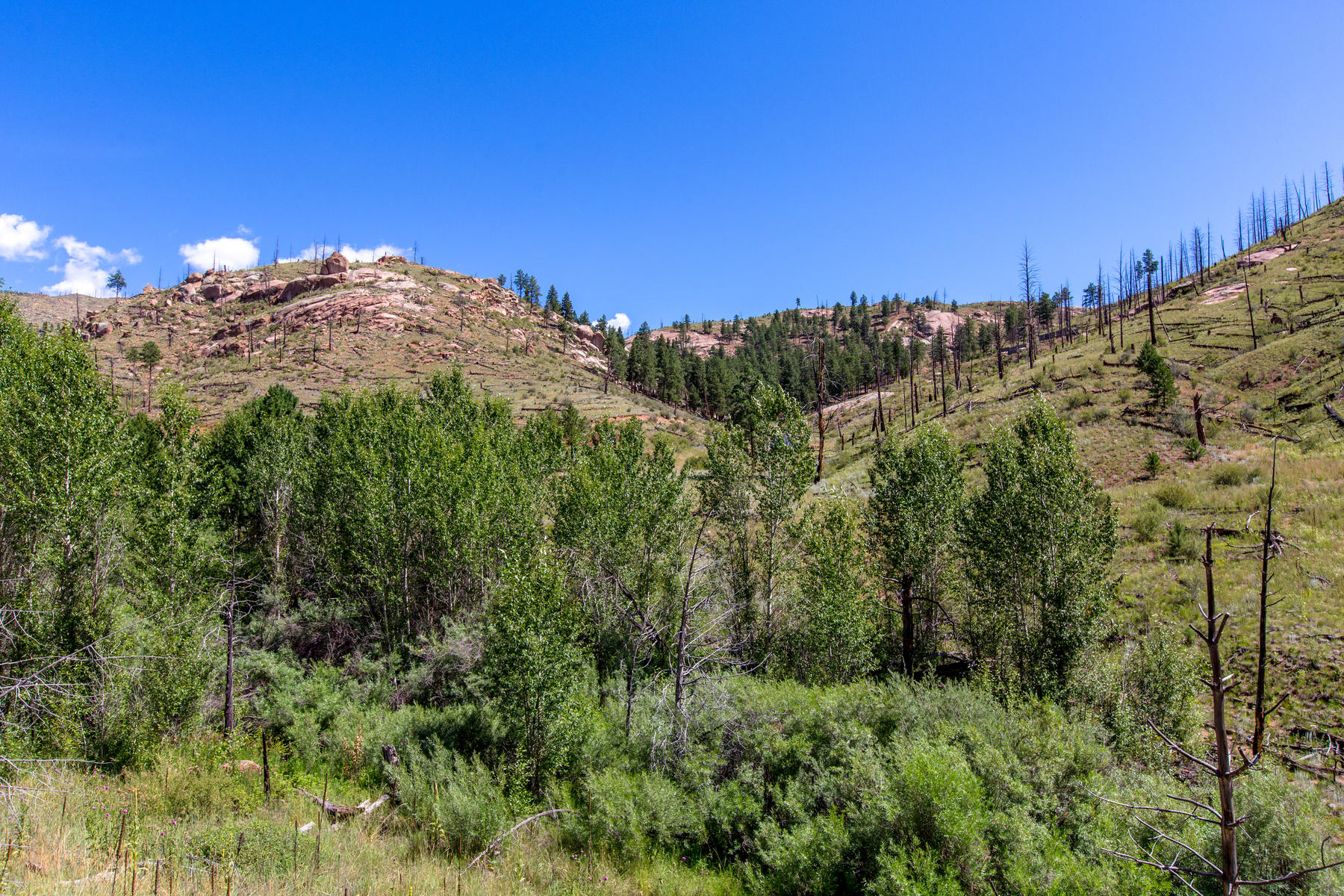 Additional photo for property listing at Ultimate Potential at Clouds End Ranch! TBD Cochise Trail, Pine, Колорадо 80470 Соединенные Штаты