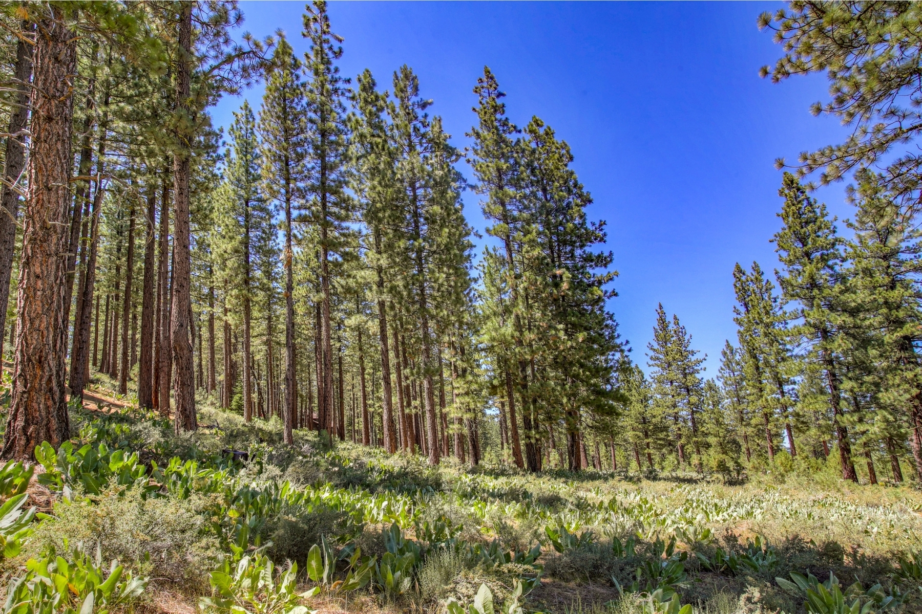 Additional photo for property listing at 7520 Lahontan Drive, Truckee, CA 7520 Lahontan Drive 特拉基, 加利福尼亚州 96161 美国