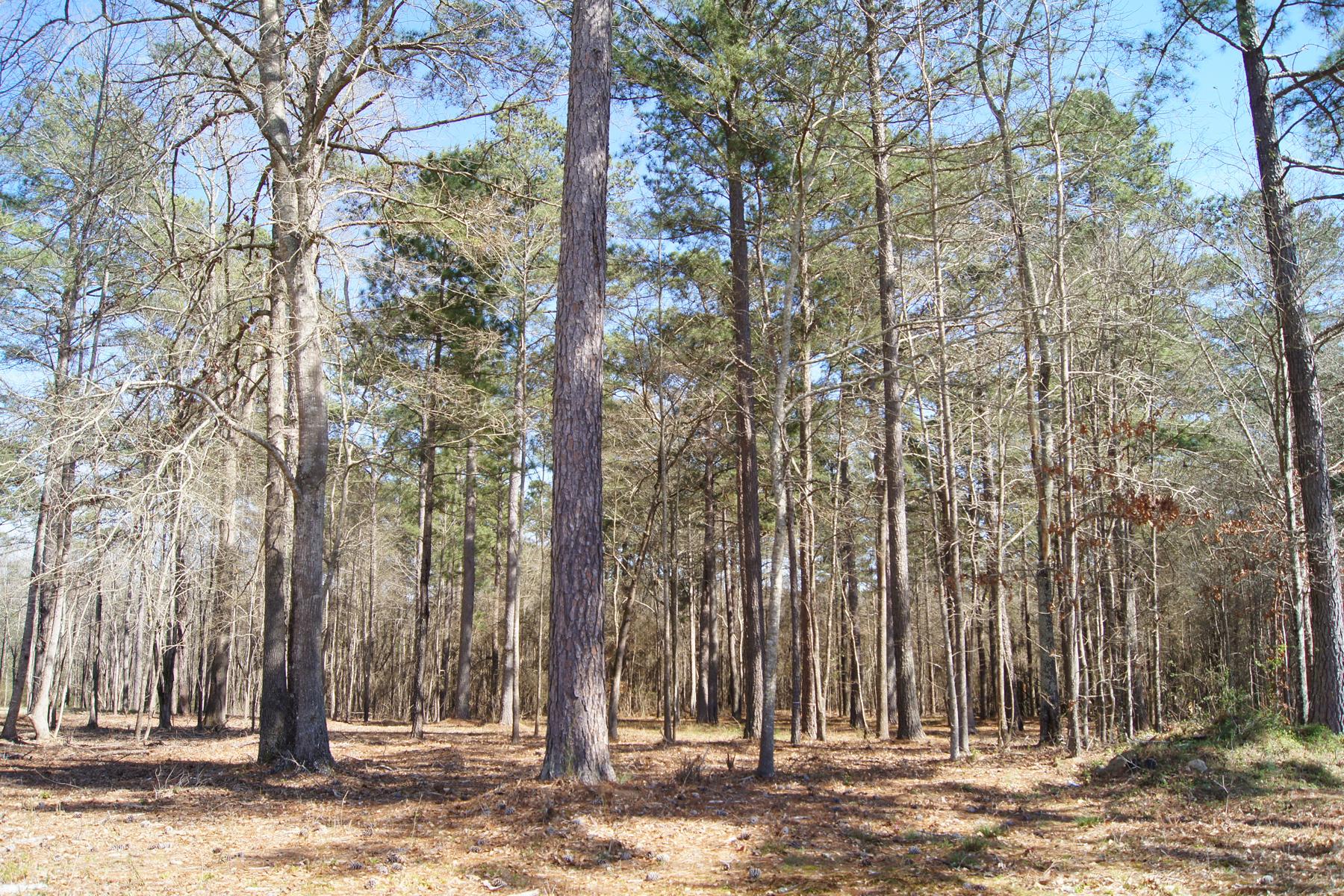 Land for Sale at Nine Acre Lot In Popular Whisper Creek Near Pinewood Studios 280 Honey Lane, Fayetteville, Georgia 30214 United States