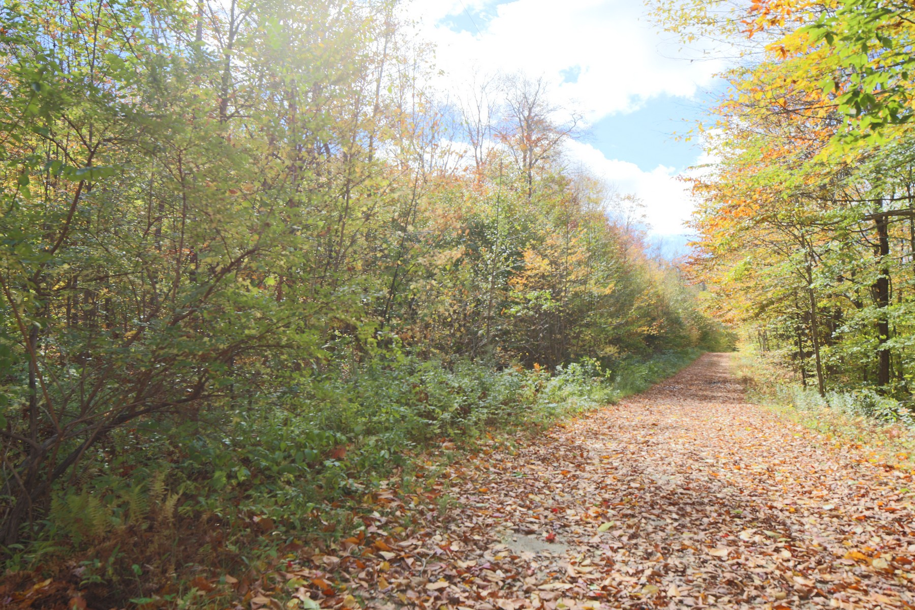 Land for Sale at 19+ Acre Permitted Building Lot Rist Hill Rd Lot 22A Reading, Vermont 05062 United States