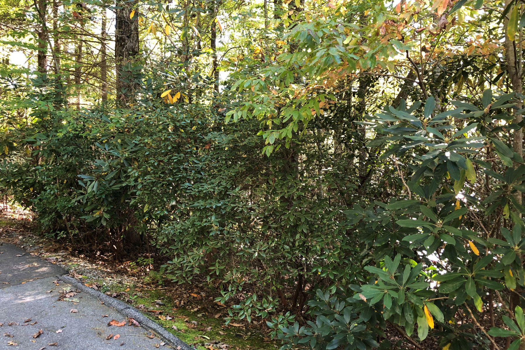 Land for Active at Lot 17 Sweetbay Lane Sapphire, North Carolina 28774 United States