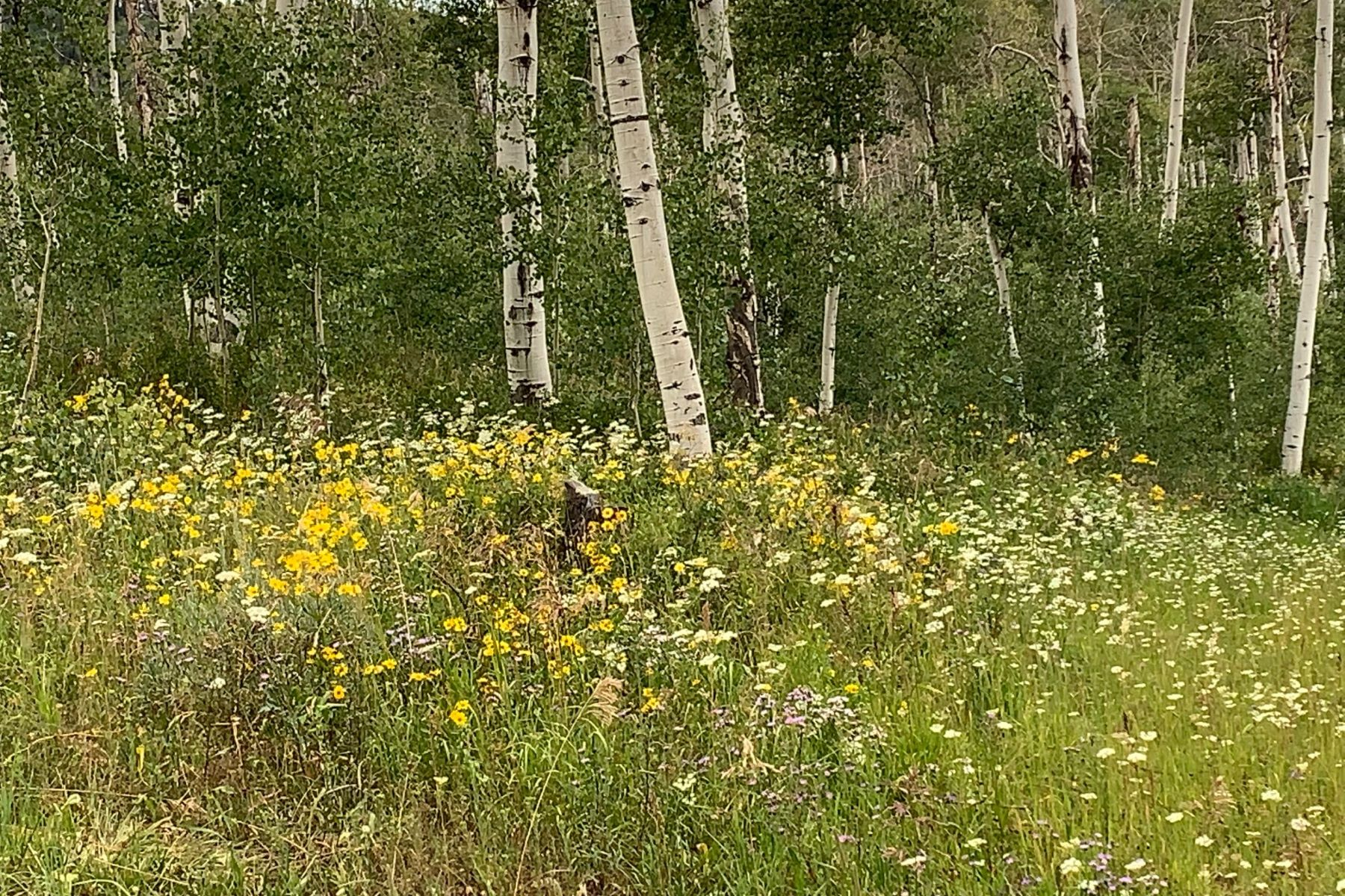 Land for Sale at Murphy Larsen Ranch Lot #3 56030 Hannahs Way Clark, Colorado 80428 United States