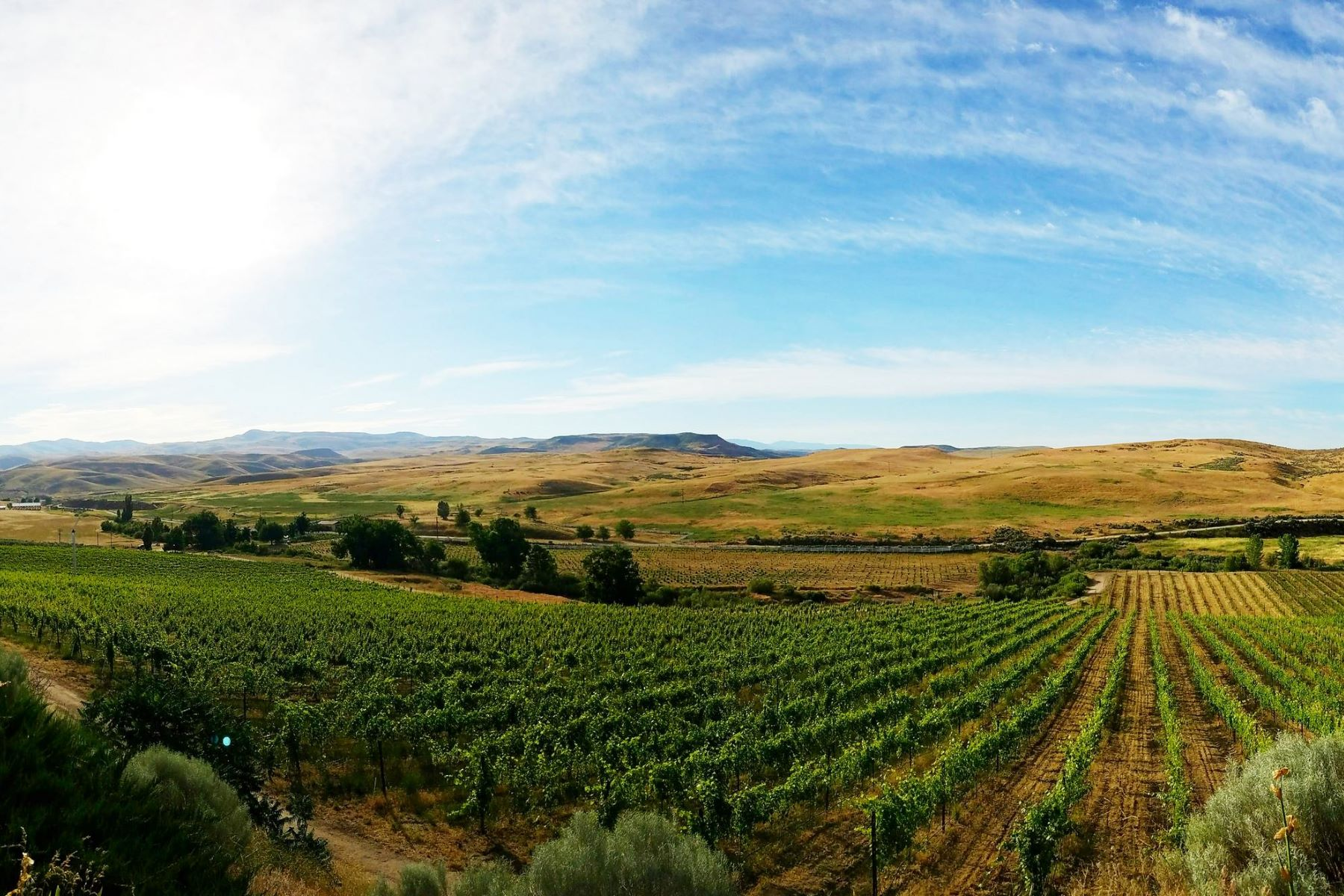 Winery for Active at 3 Horse Ranch Vineyards 5900 Pearl Road Eagle, Idaho 83616 United States