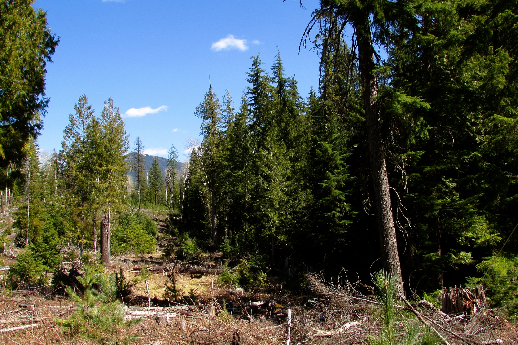 Land for Sale at Gorgeous Forested Acreage NKA Upper Gold Creek, Sandpoint, Idaho, 83864 United States