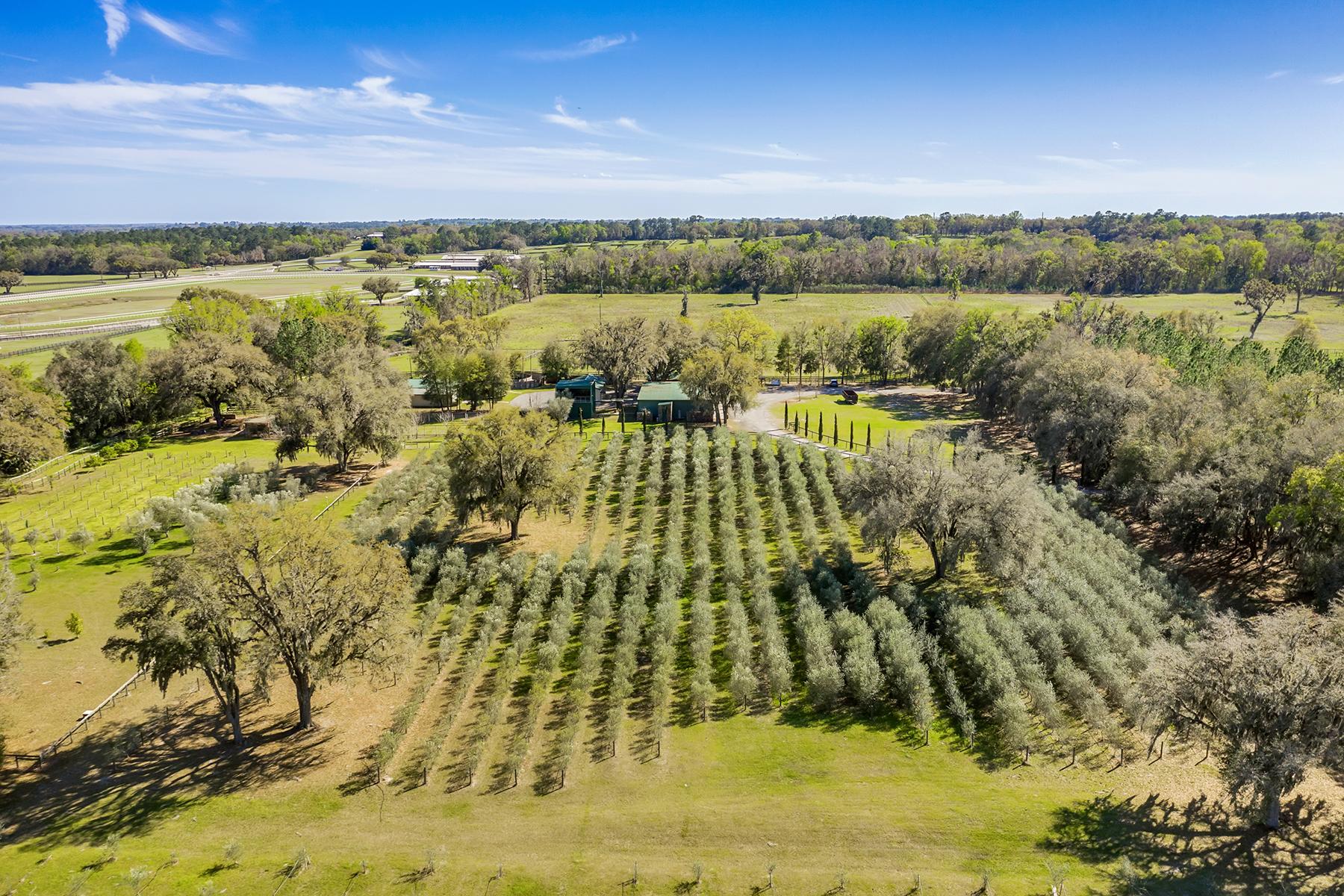 Terreno por un Venta en OCALA 9501 W Highway 326 Ocala, Florida 34482 Estados Unidos