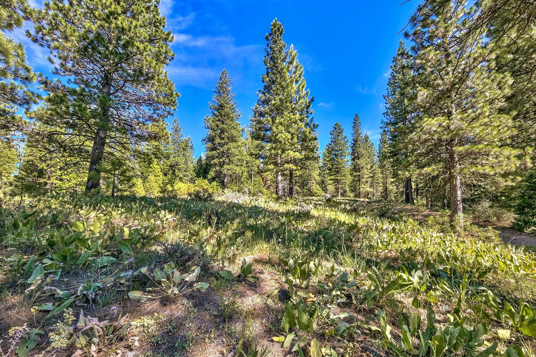 Additional photo for property listing at 483 Smith Creek Road, Graeagle, CA 96103 483 Smith Creek Road Graeagle, California 96103 United States