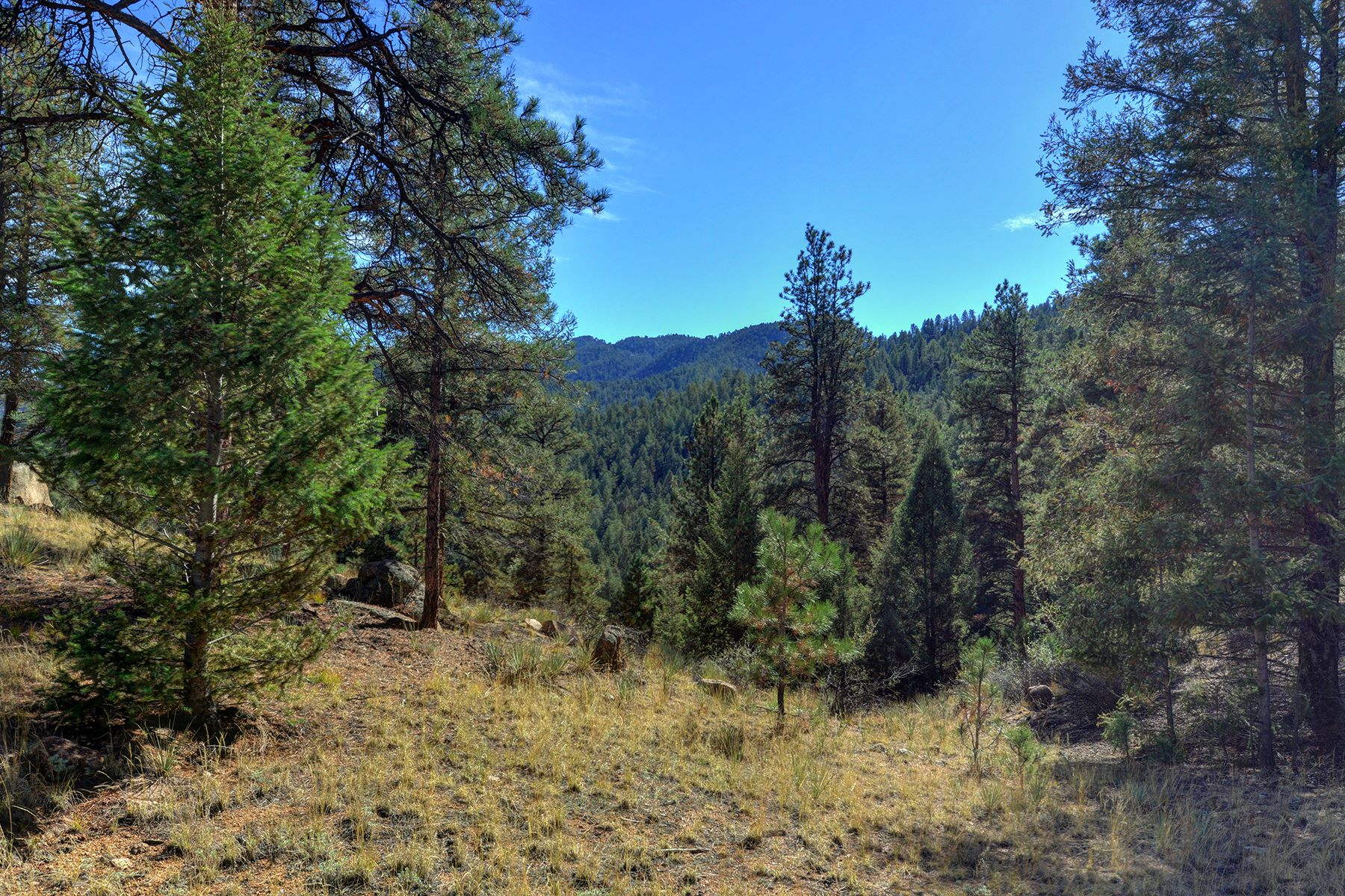 Additional photo for property listing at Amazing Parcel in Gated Fishing Community 17038 Blue Heron Drive, Pine, Колорадо 80470 Соединенные Штаты