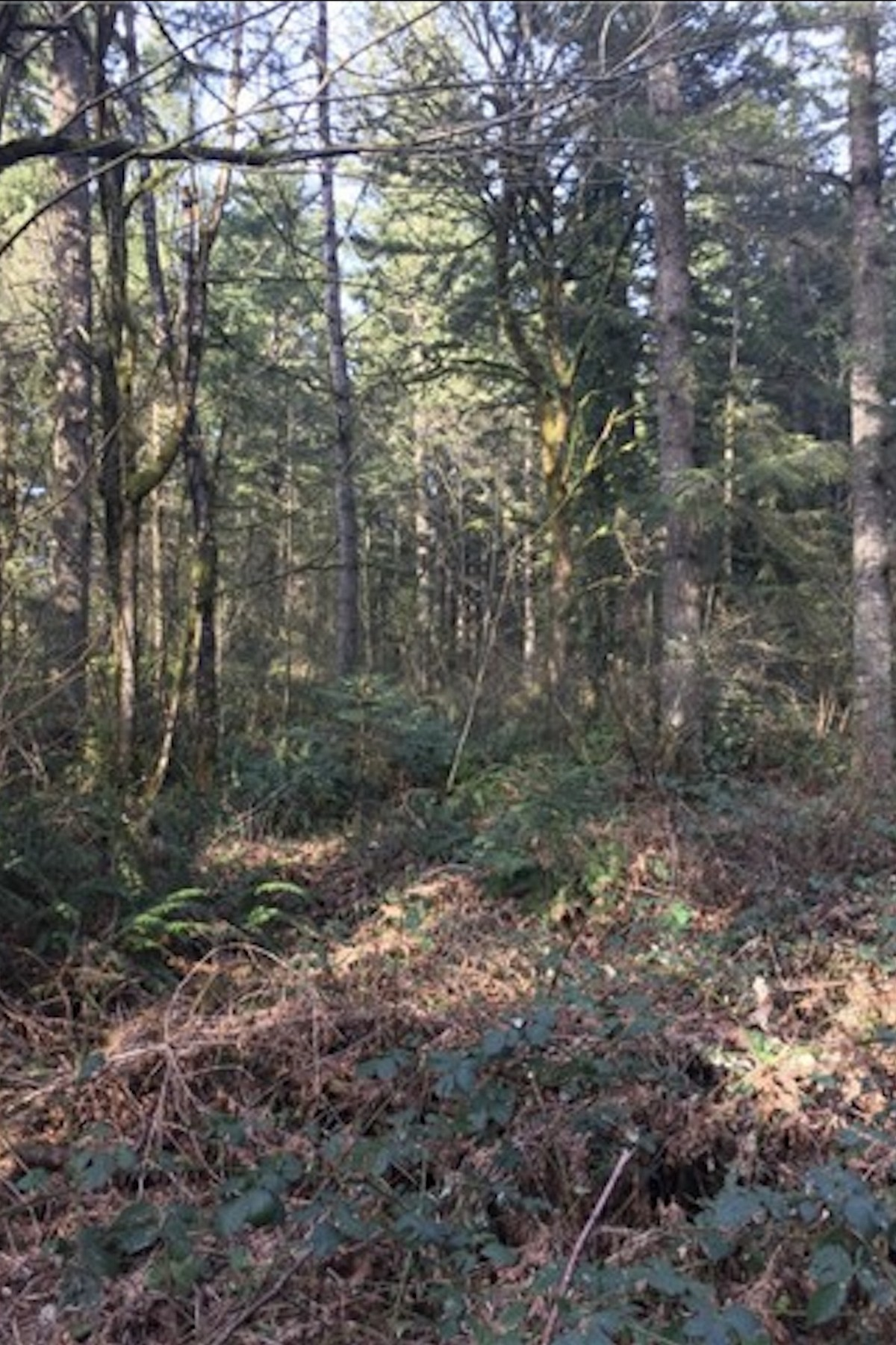 Land for Sale at 26 xxx SE Duthie Rd Issaquah, Washington 98029 United States