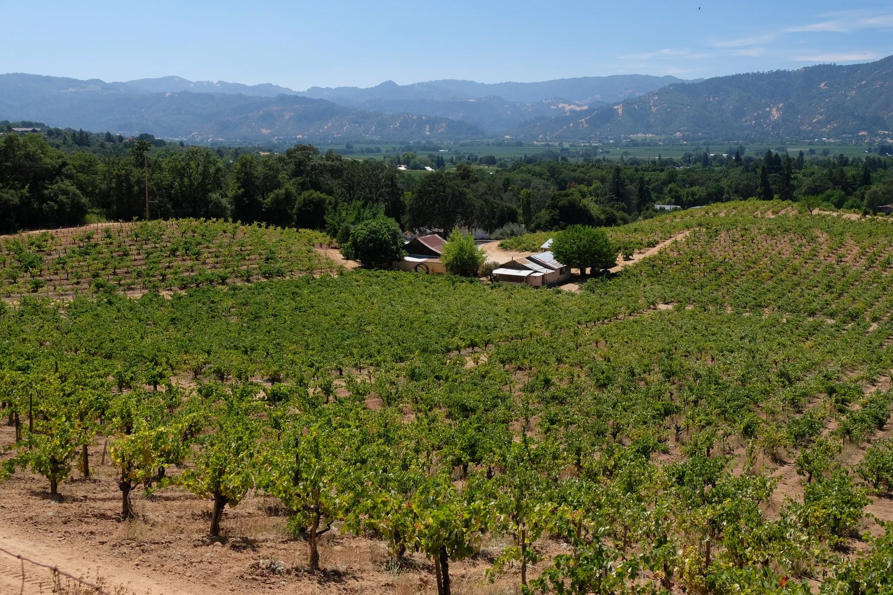 Wijngaard voor Verkoop een t Talmage Bench Vineyard 3150 Mill Creek Road Ukiah, California 95482 United States