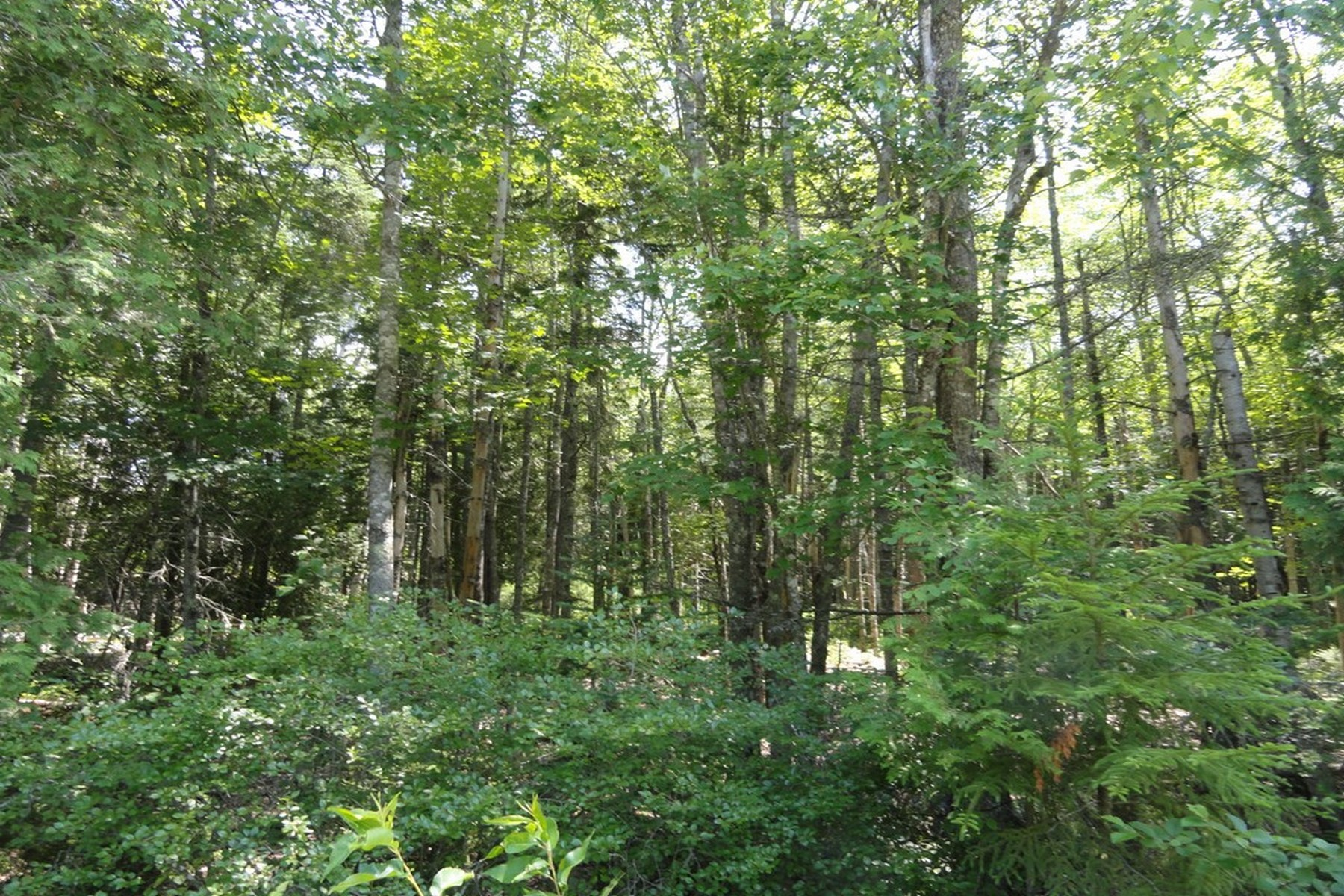 Land for Sale at 0 Indian Point Road Mount Desert, Maine 04660 United States