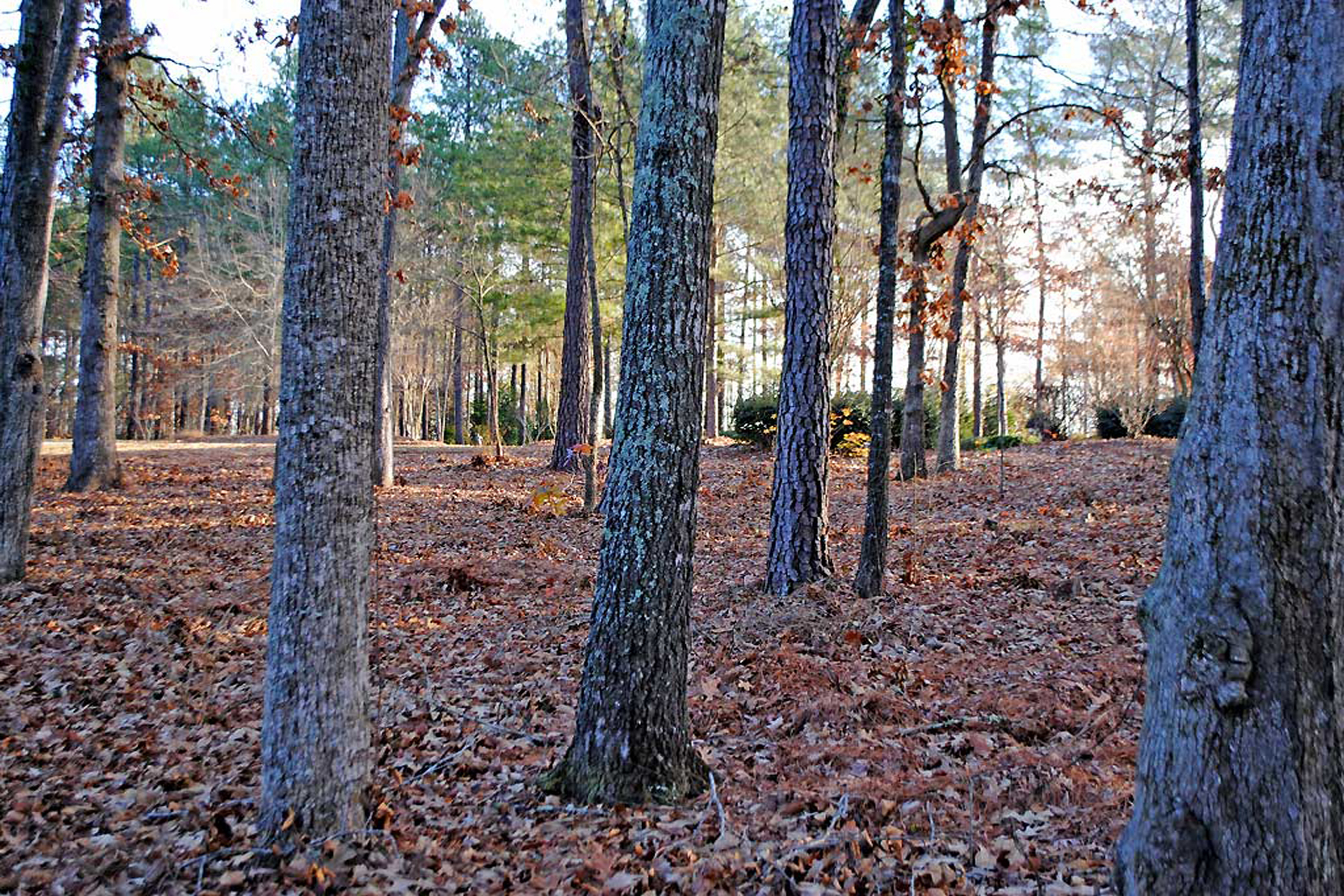 Additional photo for property listing at Beautiful Lake Front Lot 1091 Hawthorne Heights Greensboro, 조지아 30642 미국
