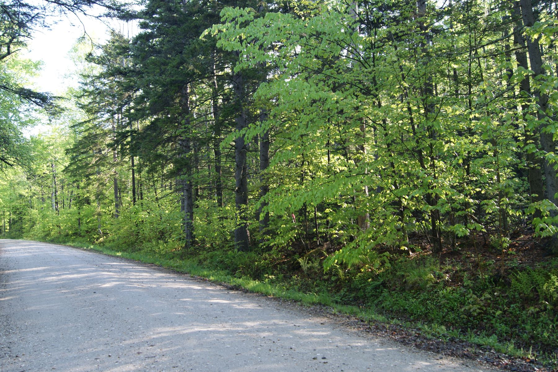 Land for Sale at Build your dream home 1628 Austin Hill Rd 62A Rochester, Vermont 05767 United States