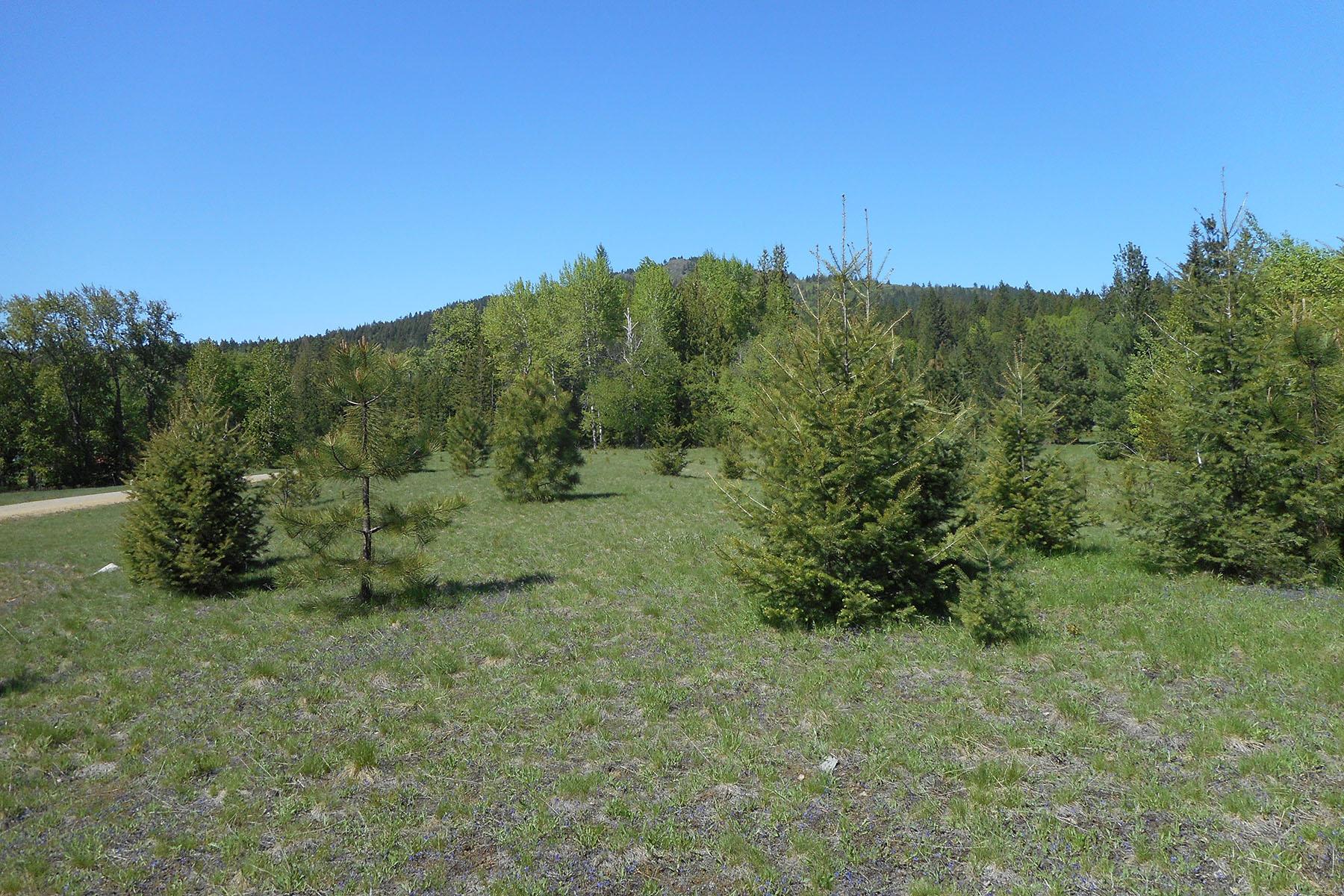 Land for Sale at Pastoral 5 acres on paved road NNA Lot 5 Sagle Road Sagle, Idaho 83860 United States