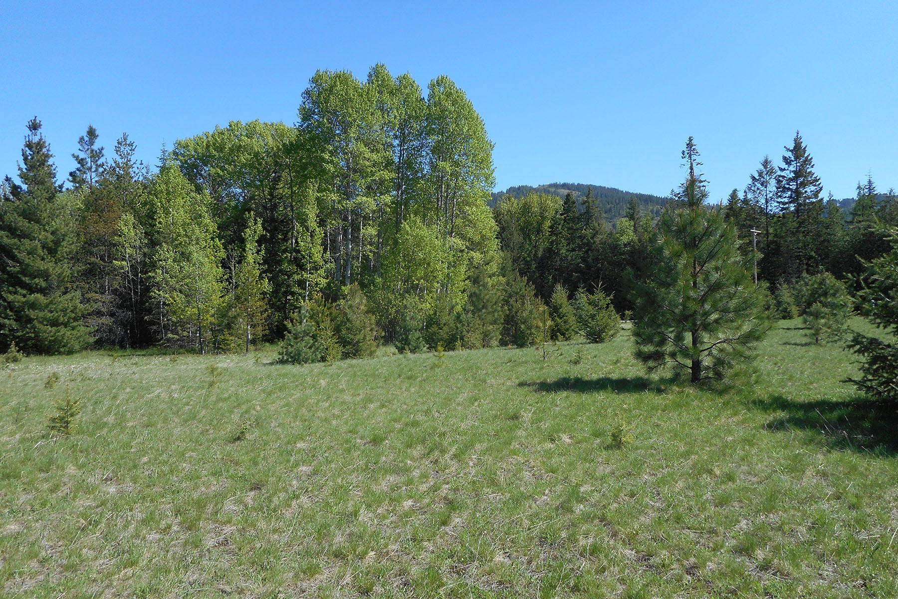 Additional photo for property listing at Pastoral 5 acres on paved road NNA Lot 5 Sagle Road Sagle, Idaho 83860 United States