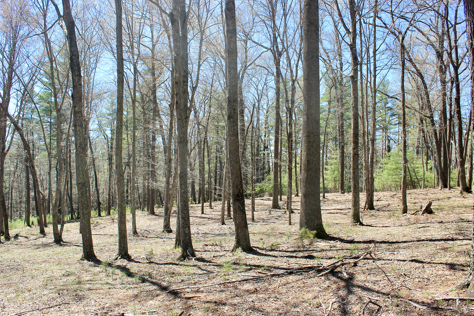Land for Active at BILTMORE FOREST Lot 2 Cedar Hill Drive Biltmore Forest, North Carolina 28803 United States