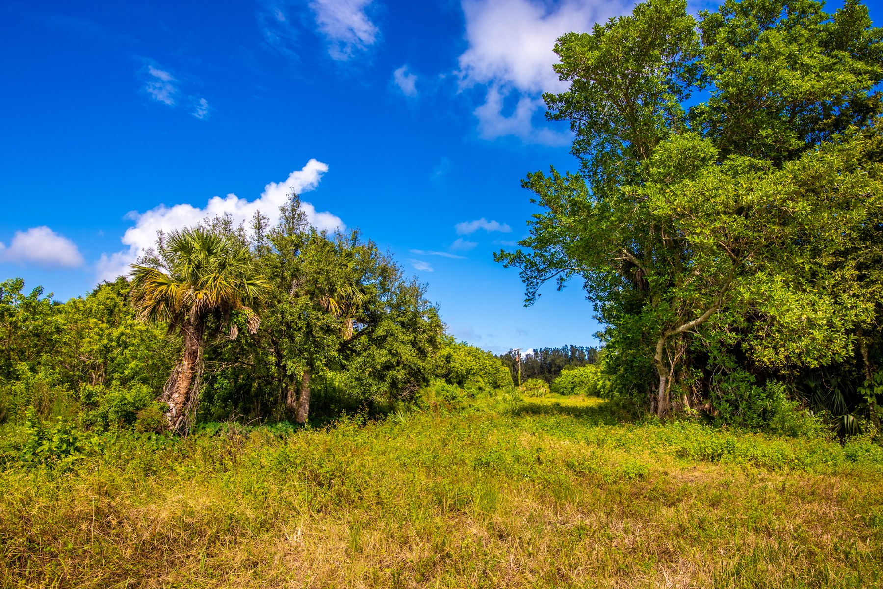 Land for Sale at Twenty Three Acres by Wabasso Causeway Area Near Indian River 4790 87th Street Sebastian, Florida 32958 United States