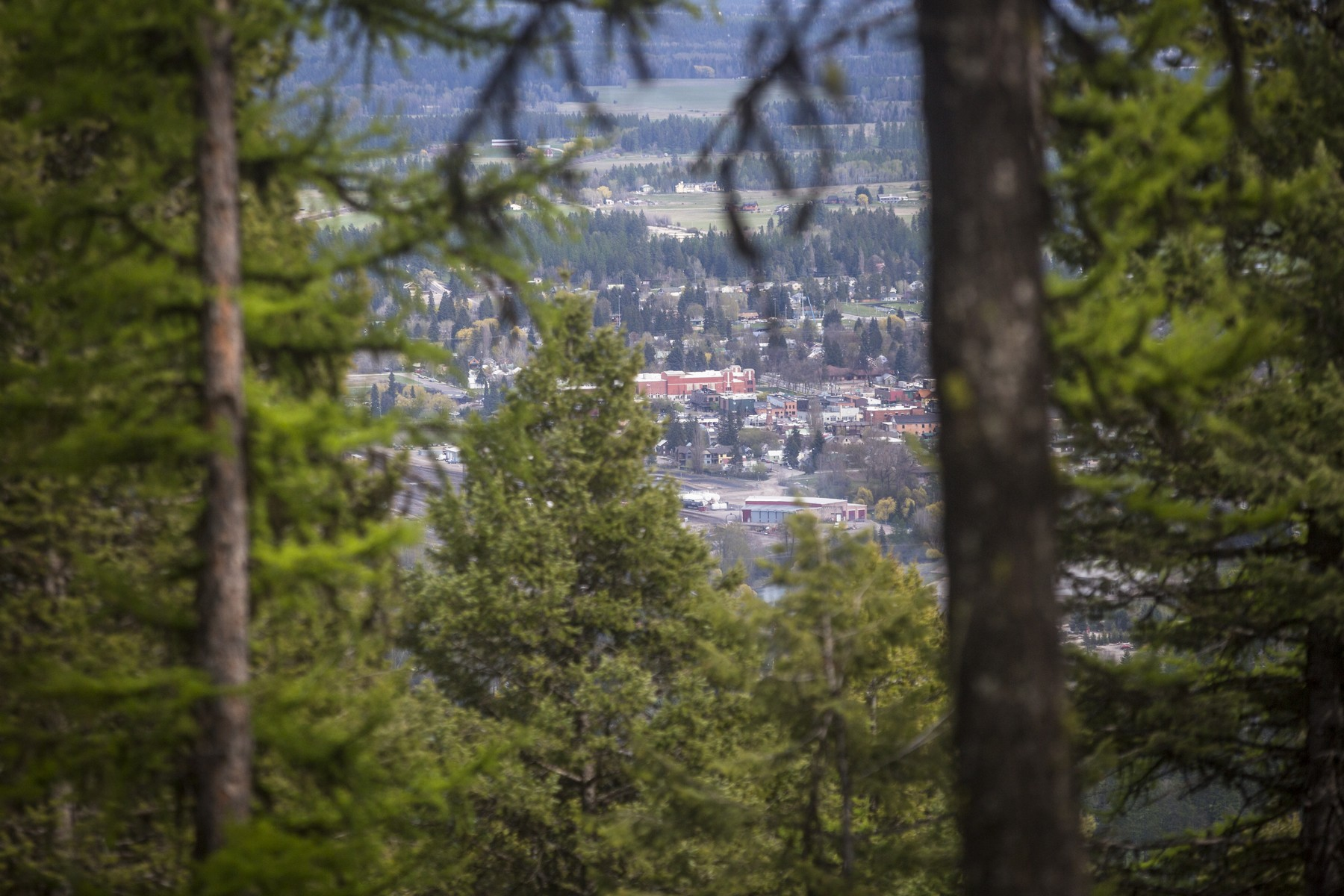 Additional photo for property listing at 2475 Wolf Tail Pines Rd , Whitefish, MT 59937 2475  Wolf Tail Pines Rd Whitefish, Montana 59937 United States