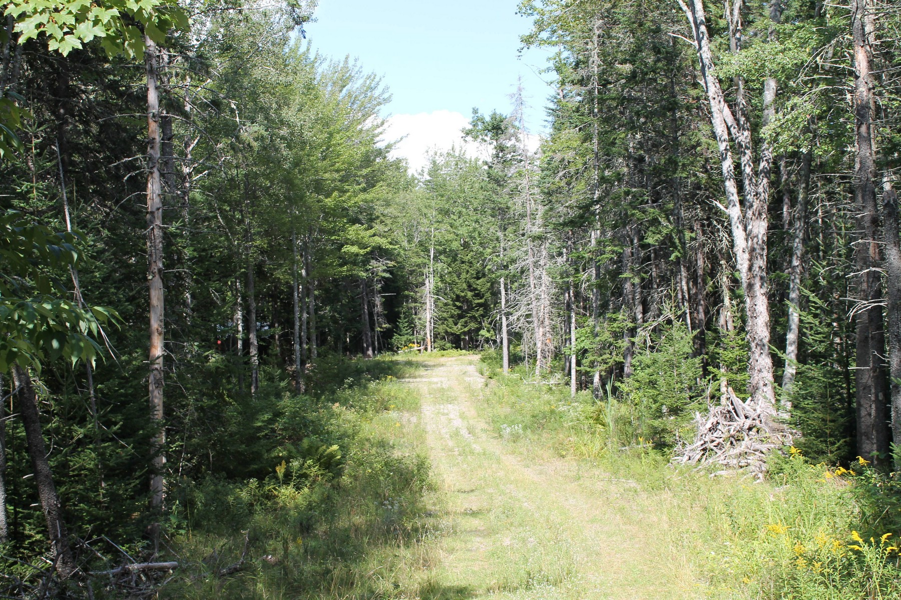 Land for Sale at The Woodlands 0 Knox Road Bar Harbor, Maine 04609 United States