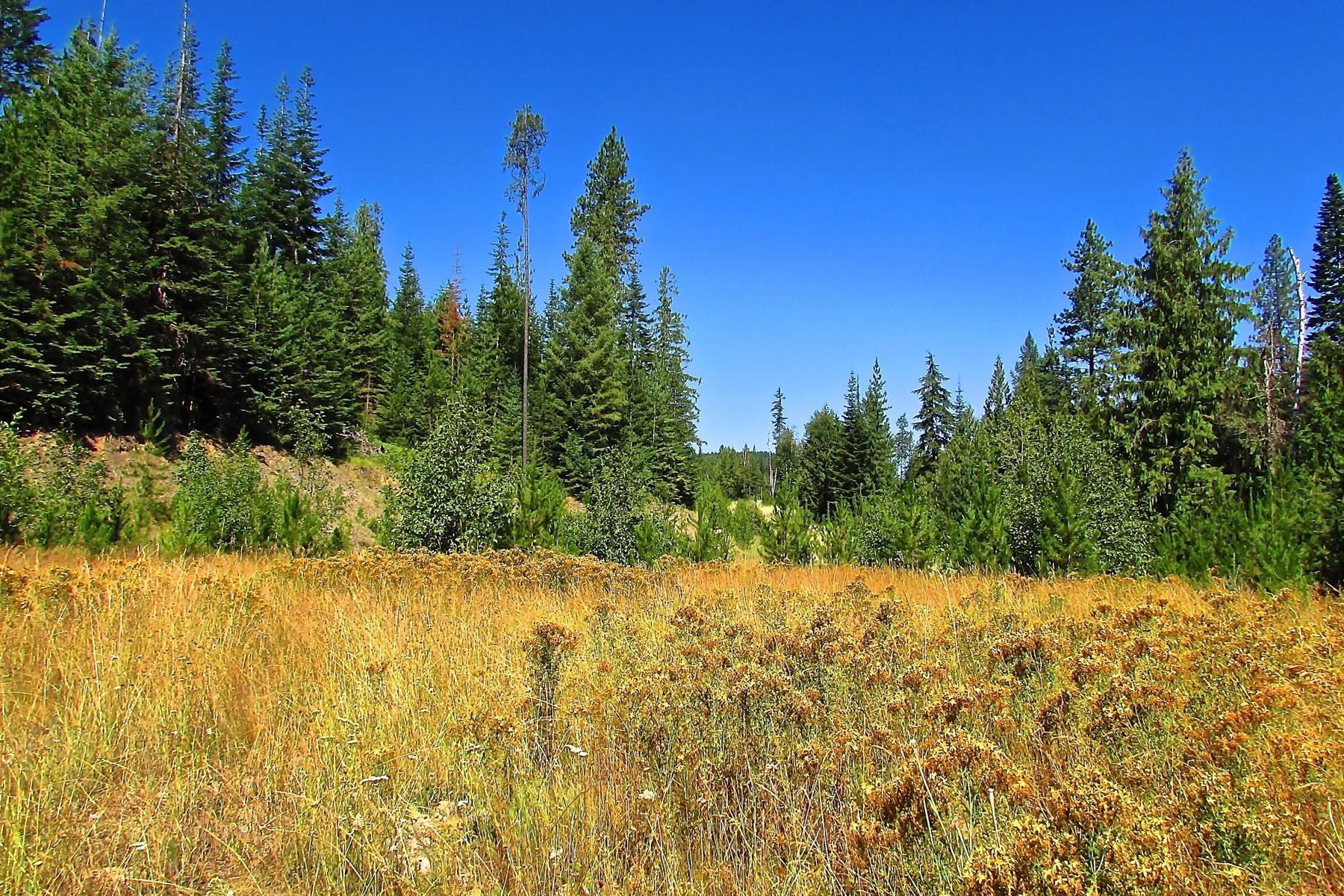 Land for Active at Brookshire Lane 34 acres or 7 parcels NNA Crosswhite Road Careywood, Idaho 83809 United States