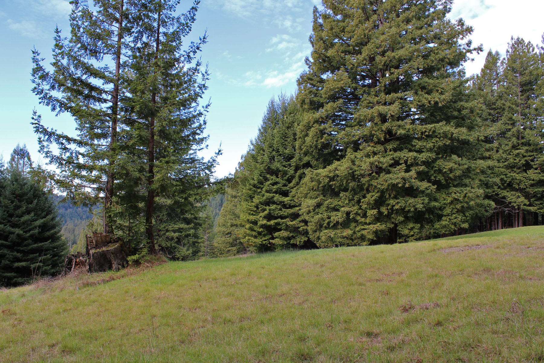 Additional photo for property listing at Two Parcels, Timberland & a Place to Stay 25270 Company Ranch Road Fort Bragg, California 95437 United States