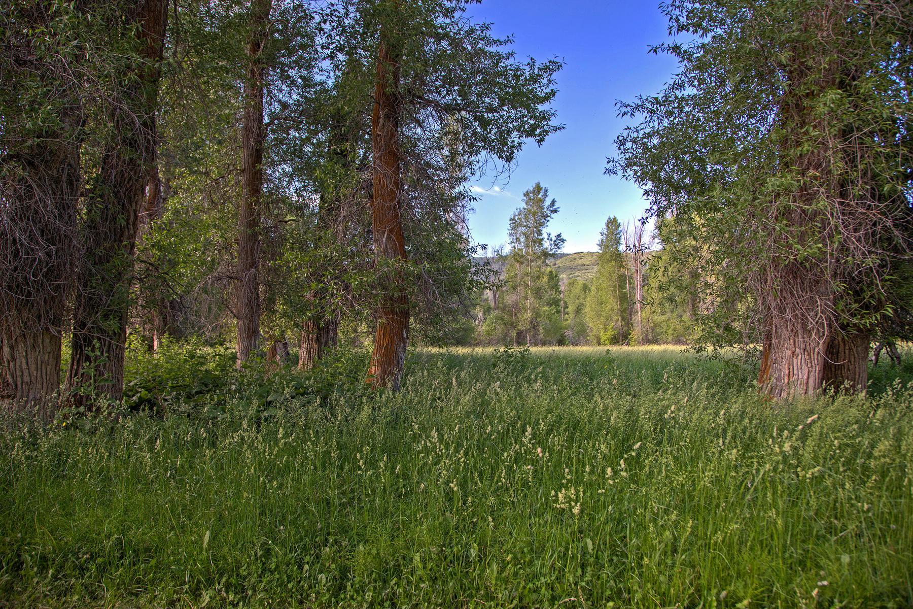 Additional photo for property listing at Private, Fly Fishing River Frontage 0 Bench Creek Rd Woodland, Utah 84036 United States