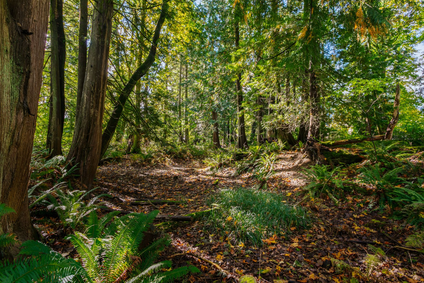 Land for Sale at Peaceful Surroundings 548 NE 8th St North Bend, Washington 98045 United States