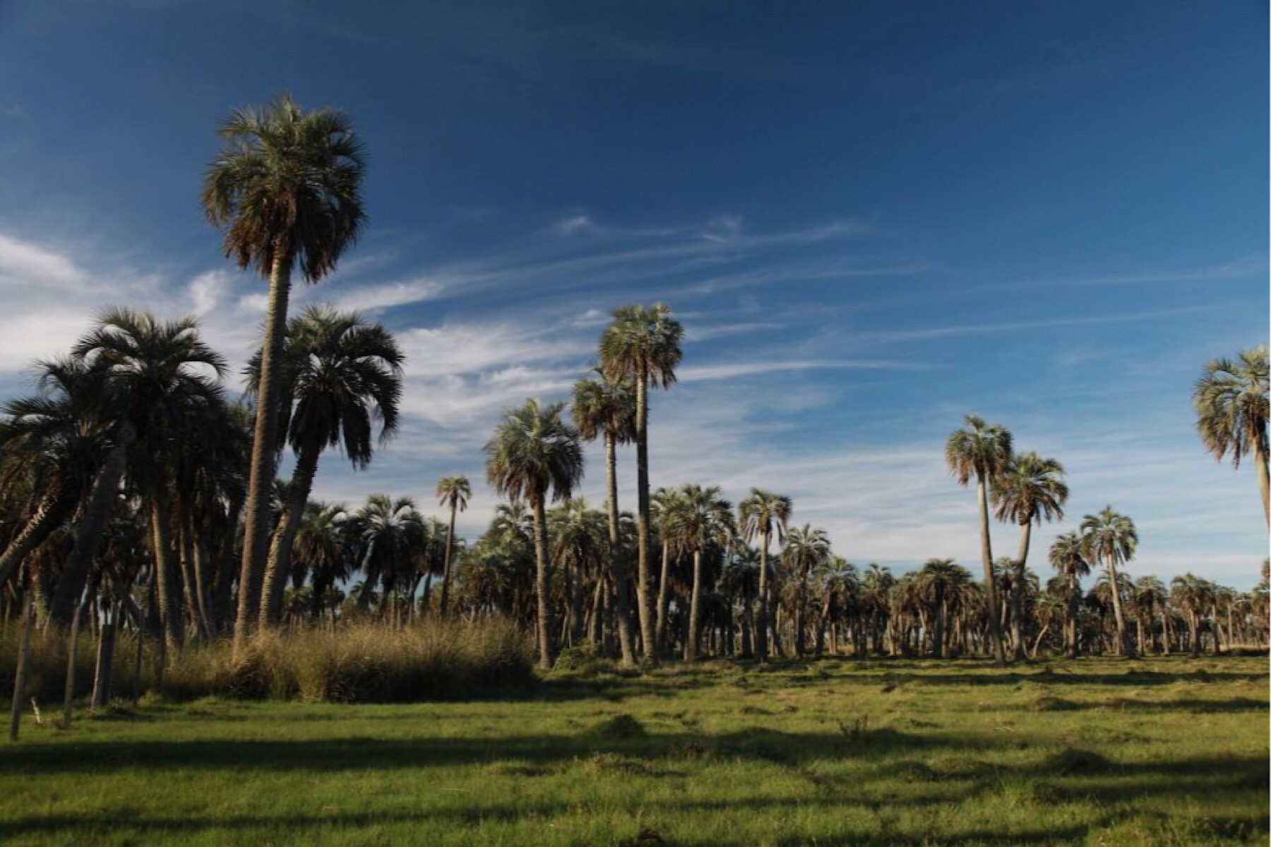 Granjas / Hacienda / Platanción por un Venta en El Palmar Laguna Negra Rocha, Rocha 27000 Uruguay
