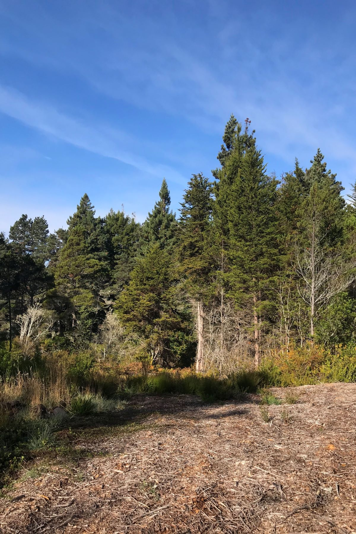 Land for Sale at Doyle Creek Sunny Parcel 43187 Caspar Little Lake Rd. Mendocino, California 95460 United States