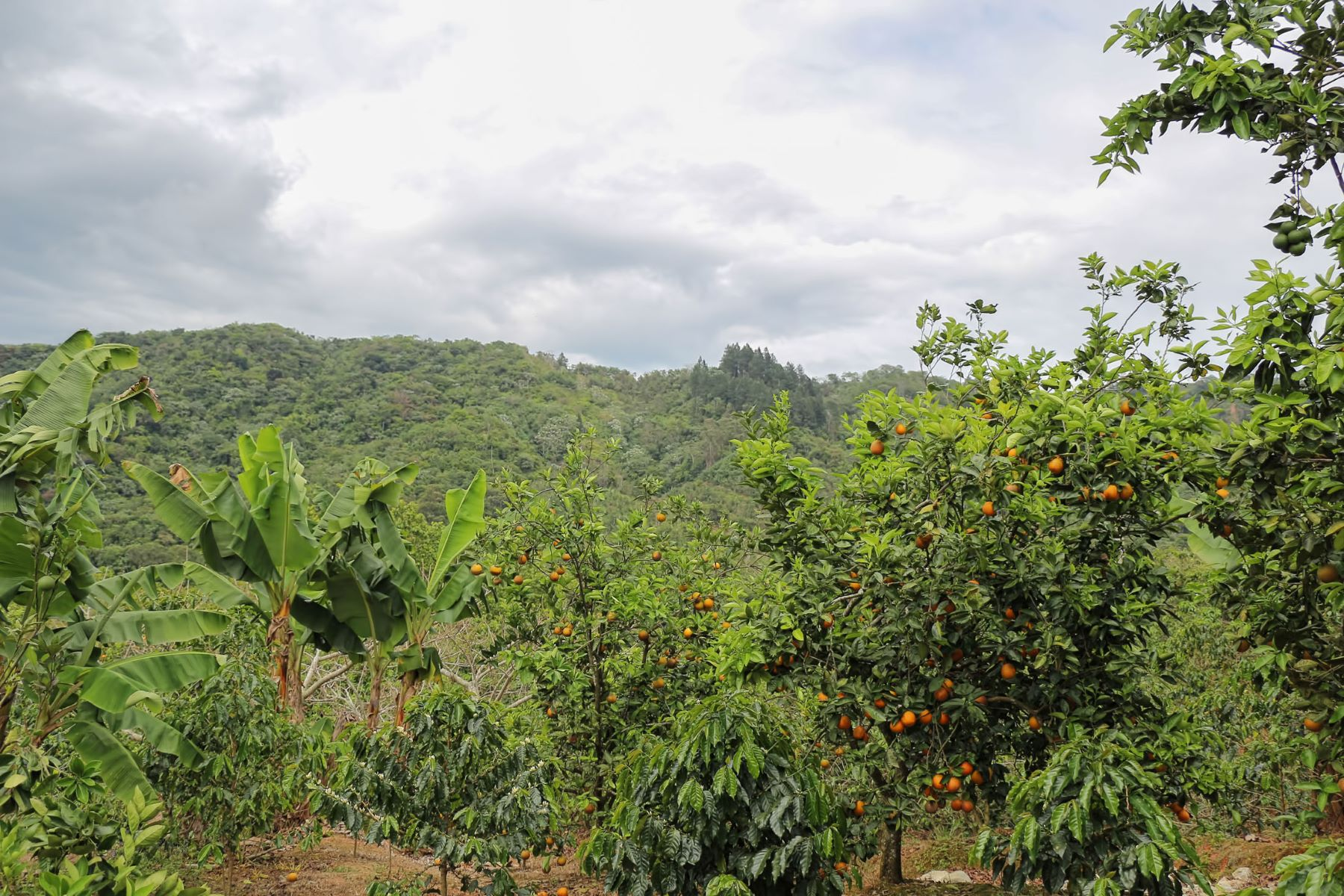 Additional photo for property listing at Hacienda Las Nubes  Adjuntas, 00601 Puerto Rico