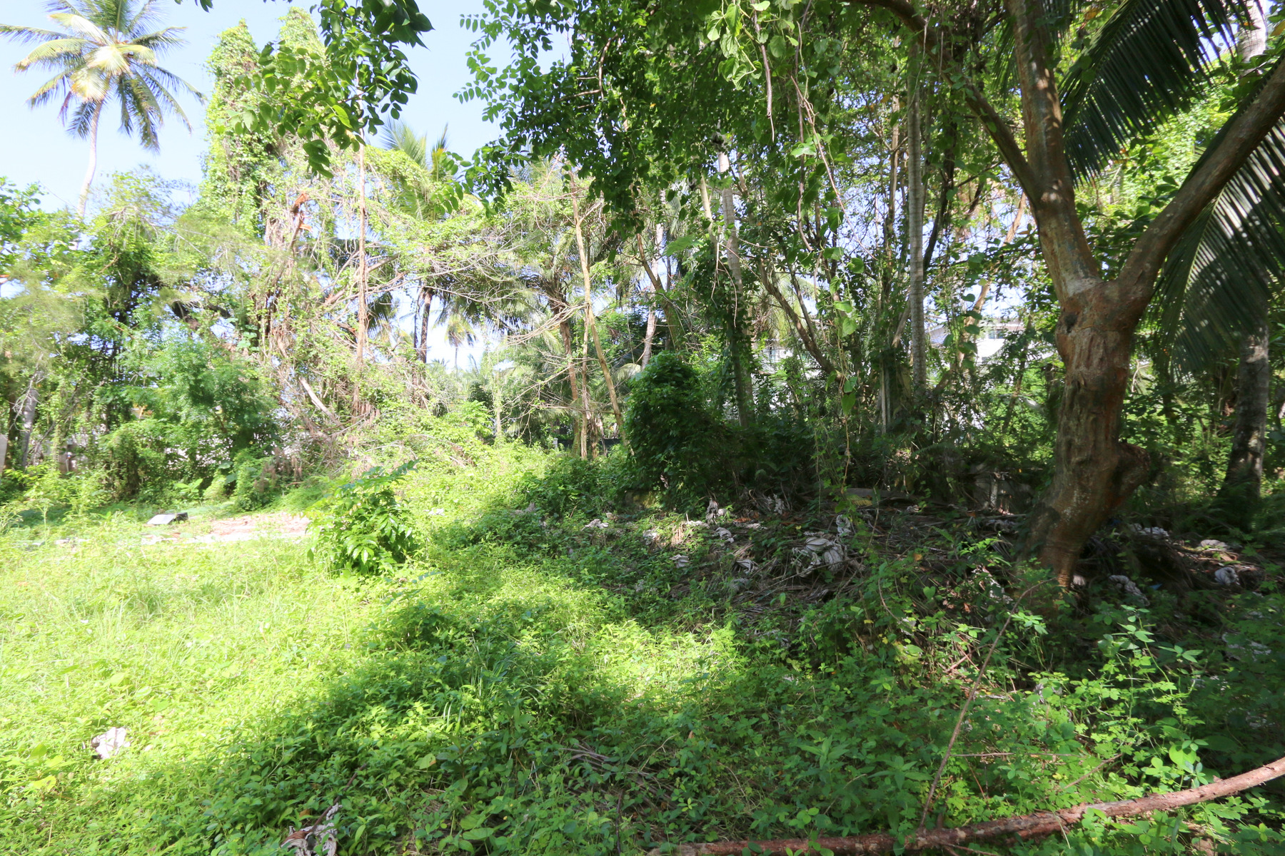 Land for Sale at Rock-star Land Las Terrenas, Samana, Dominican Republic