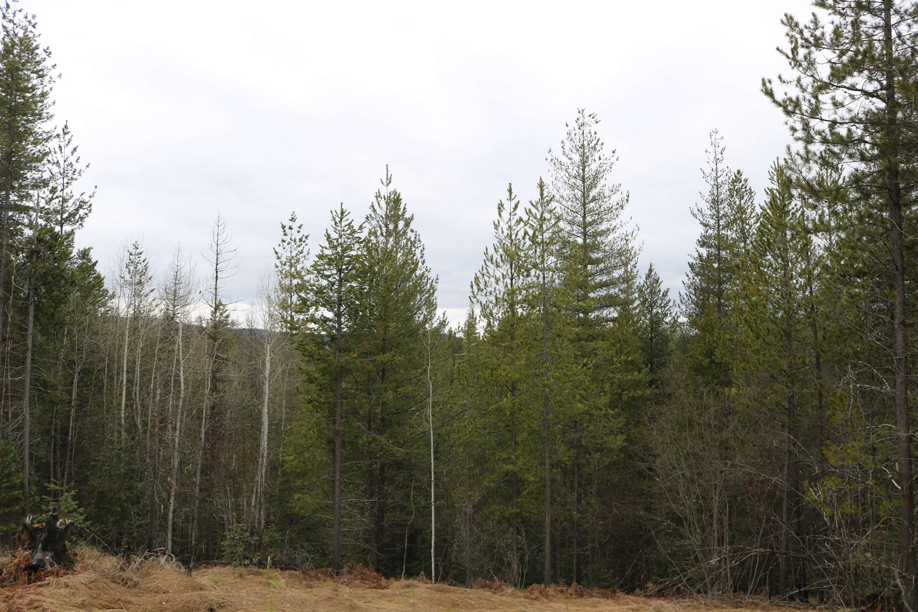 Terrain pour l Vente à 118 Blazing Saddle Pinehurst, Idaho, 83850 États-Unis