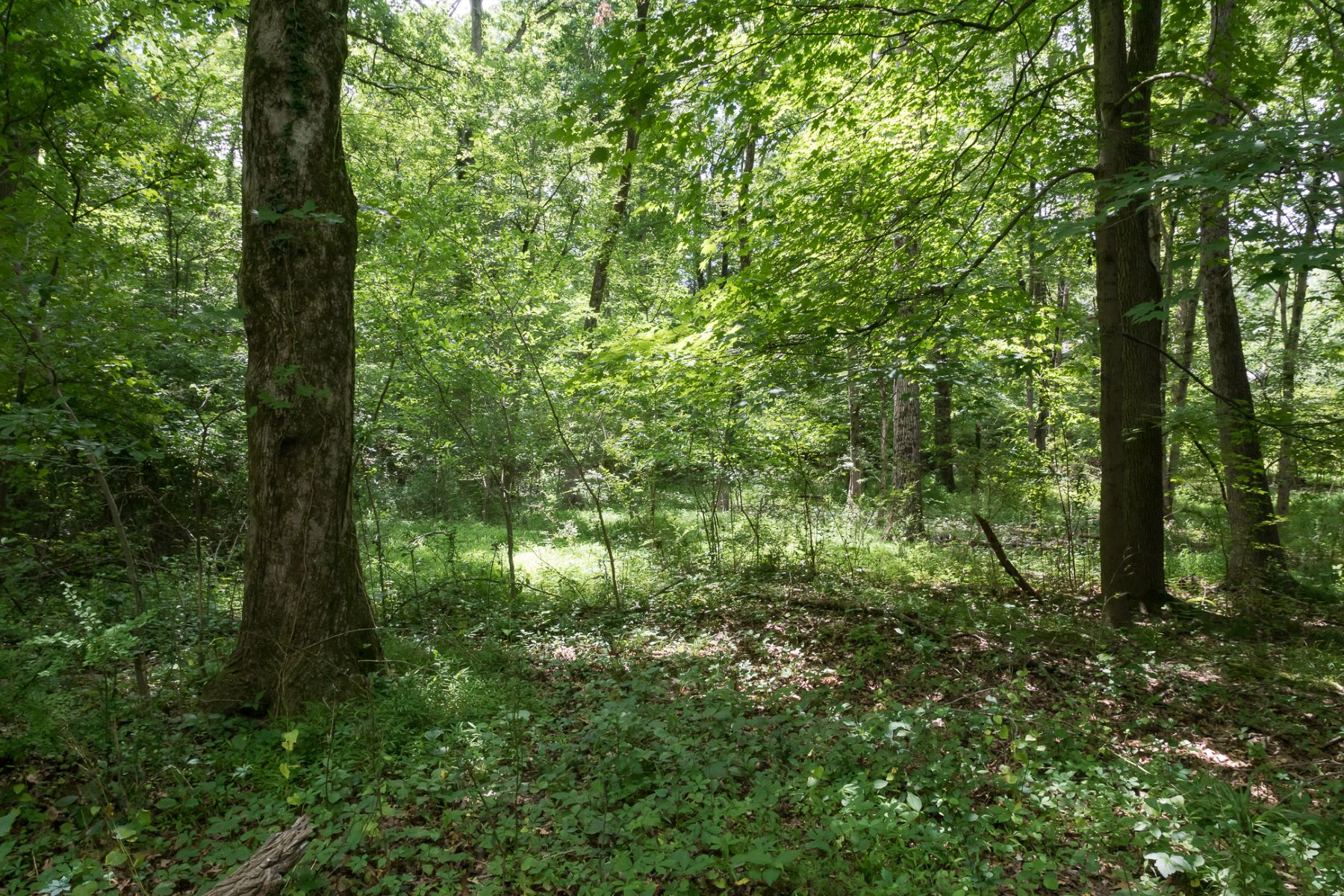 Additional photo for property listing at Build Your Dream Home Here! 156 Wilson Road, Princeton, Νιου Τζερσεϋ 08540 Ηνωμένες Πολιτείες