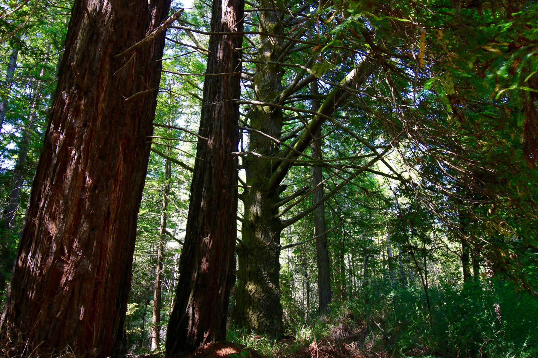 Land for Sale at Investment Opportunity 31550 Simpson Lane Fort Bragg, California 95437 United States