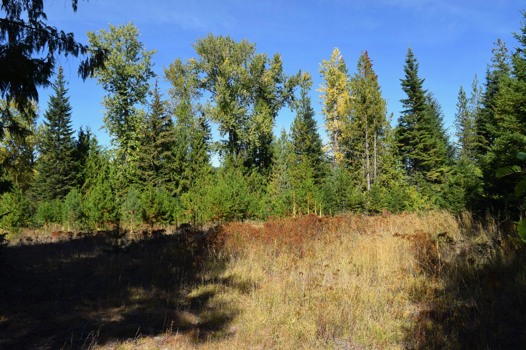 Land for Active at 40 Acres - Gleason-McAbee 4482 Gleason McAbee Rd Priest River, Idaho 83856 United States