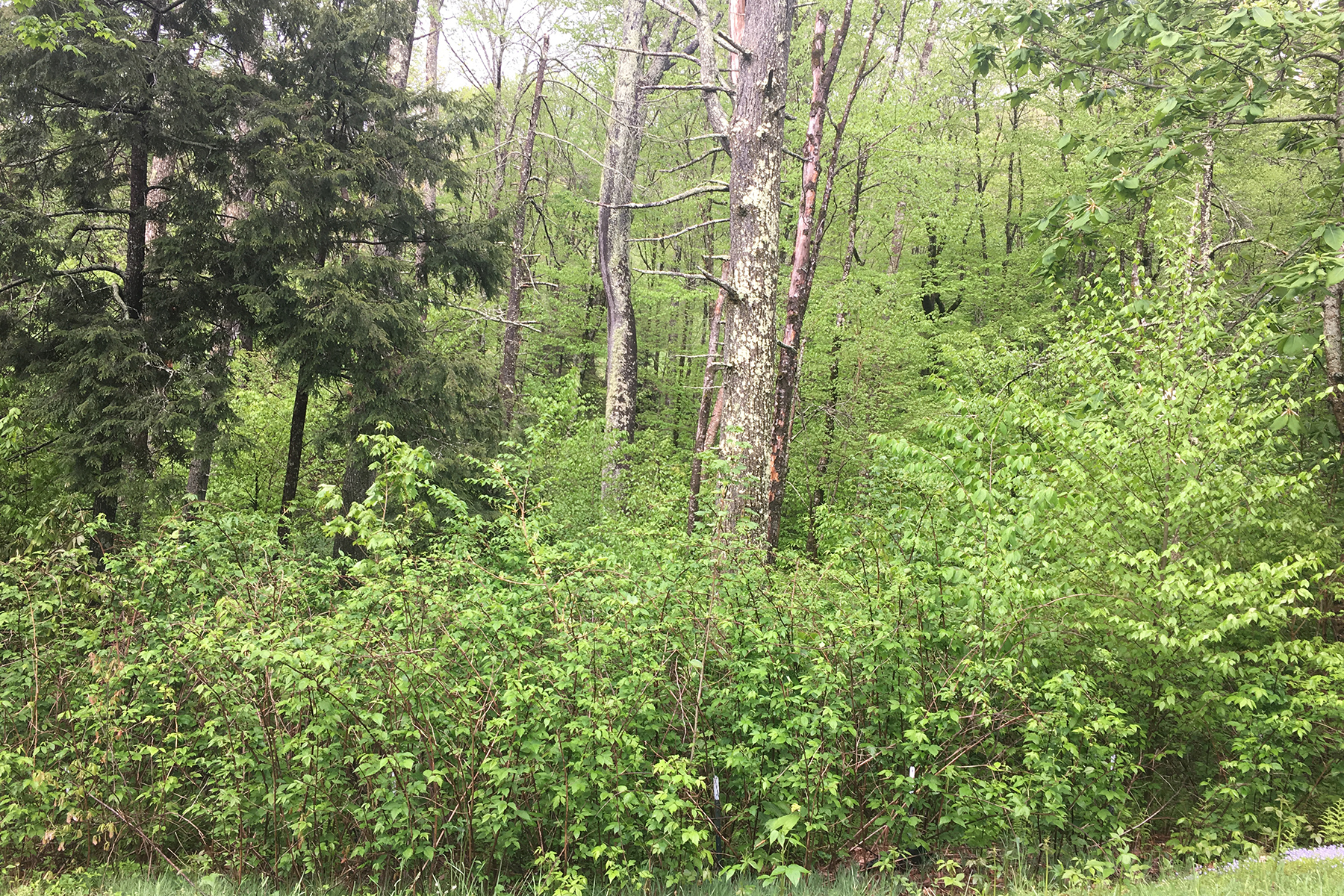 Land for Sale at LINVILLE - THE VILLAGE AT GRANDFATHER Lot 24 Linville River Ln Linville, North Carolina 28646 United States