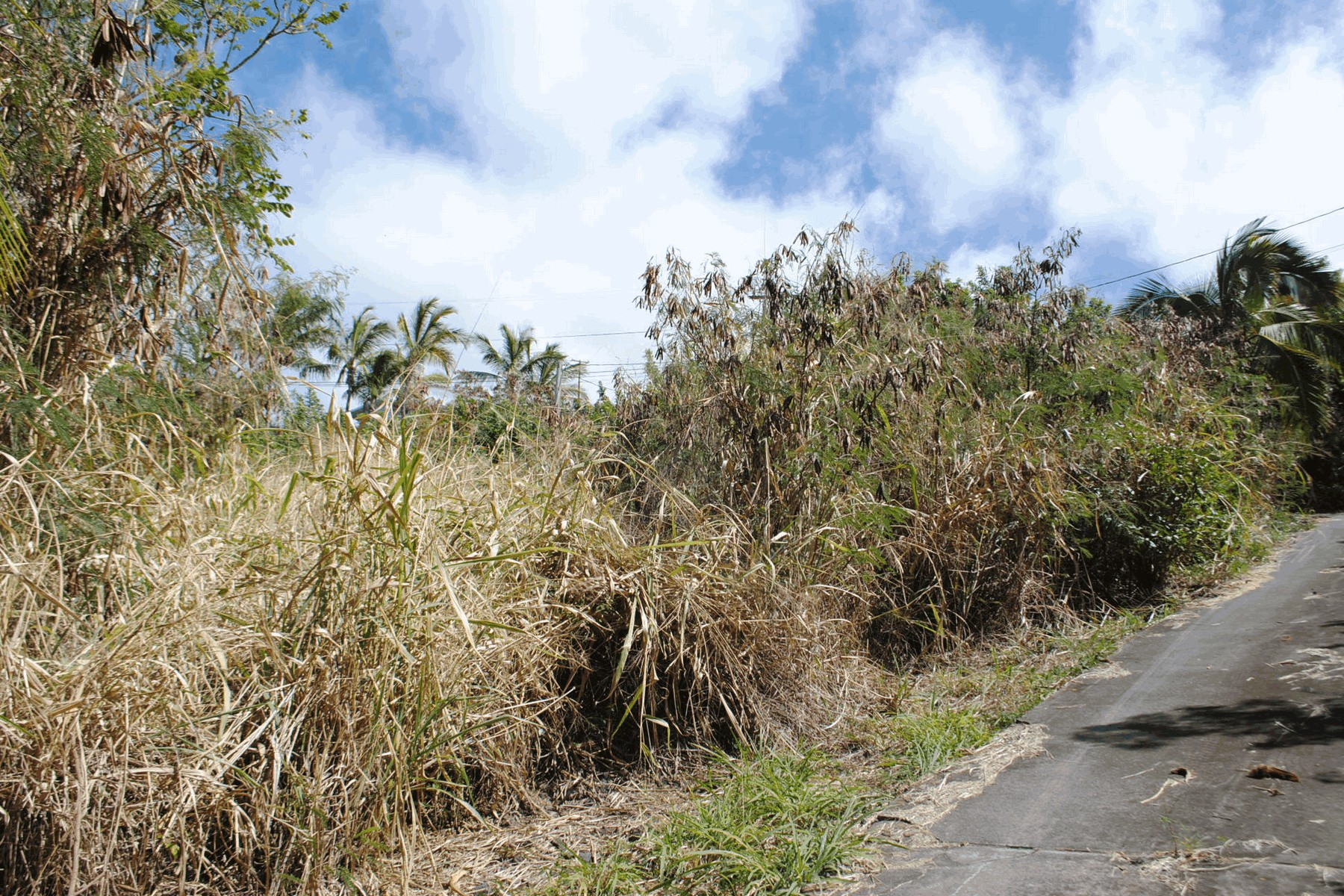 Land for Active at Kona Paradise ROAD D Captain Cook, Hawaii 96704 United States