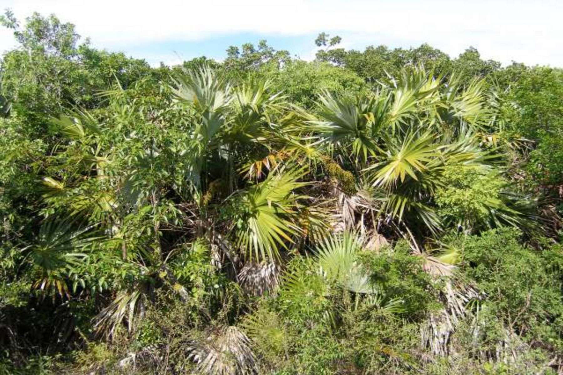 Land for Sale at Great Residential Lot Eleuthera Island Shores, Gregory Town, Eleuthera Bahamas