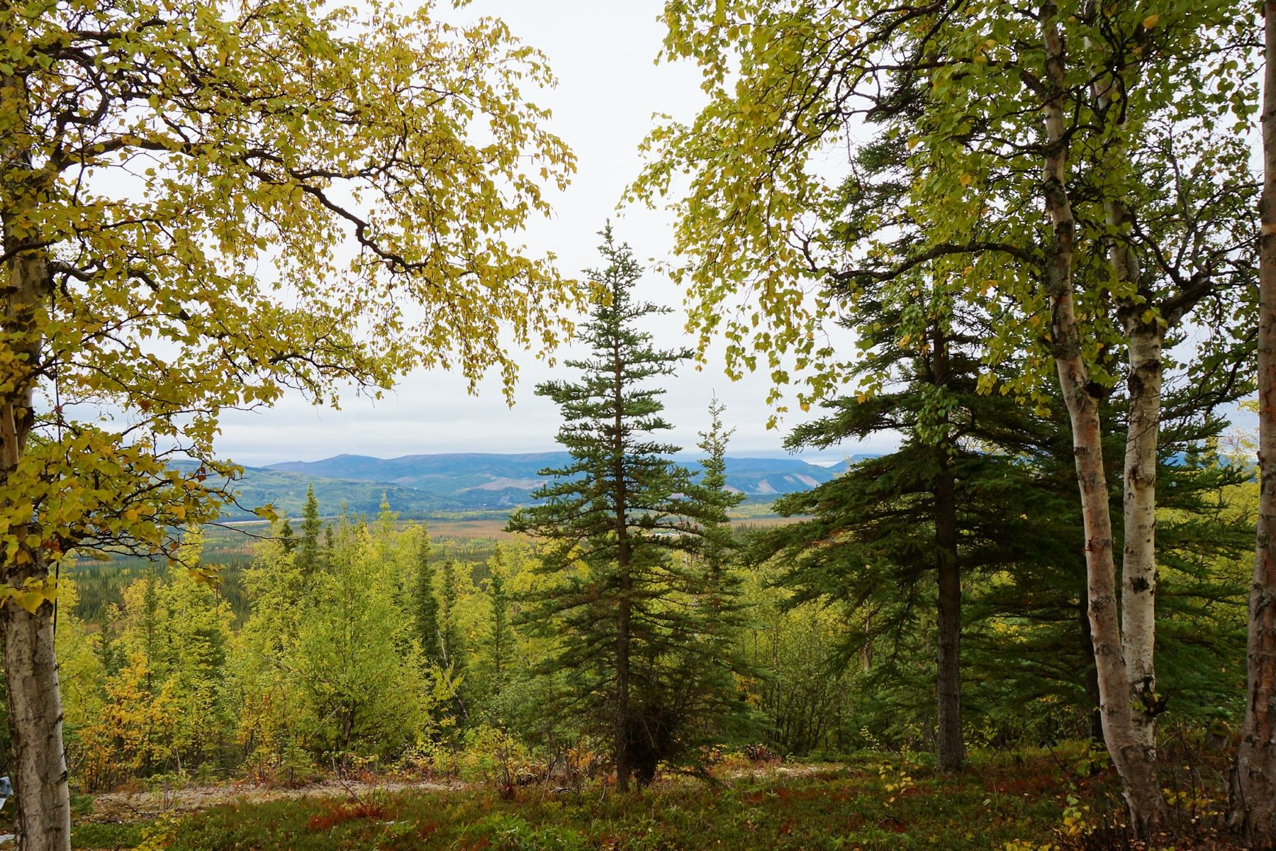 Land for Sale at Lot 2 Ridgetop Cabins Road Ridgetop Subdivision Healy, Alaska 99743 United States